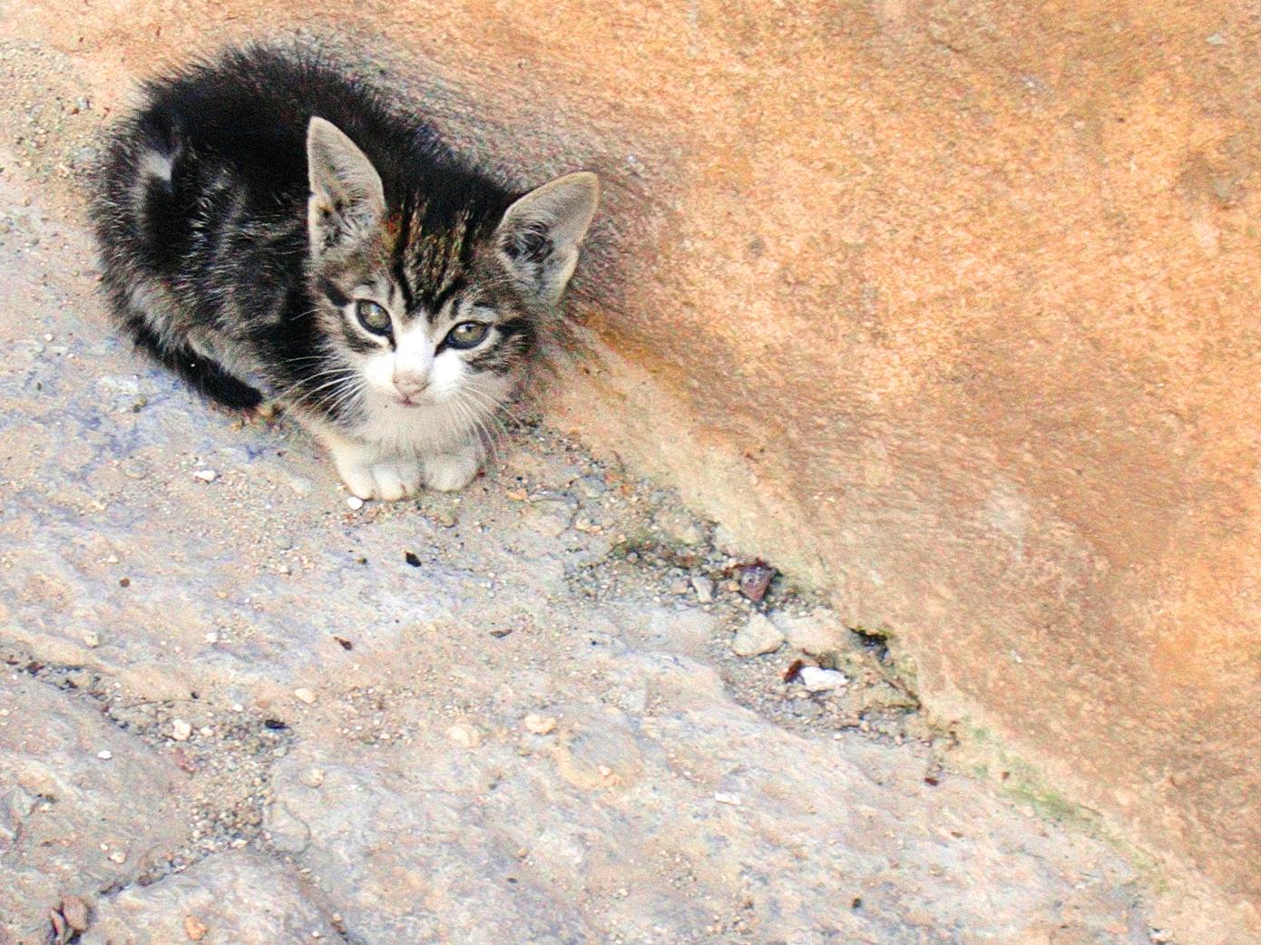 Small Kitten, Cat, Cute, Kitten, Little, HQ Photo