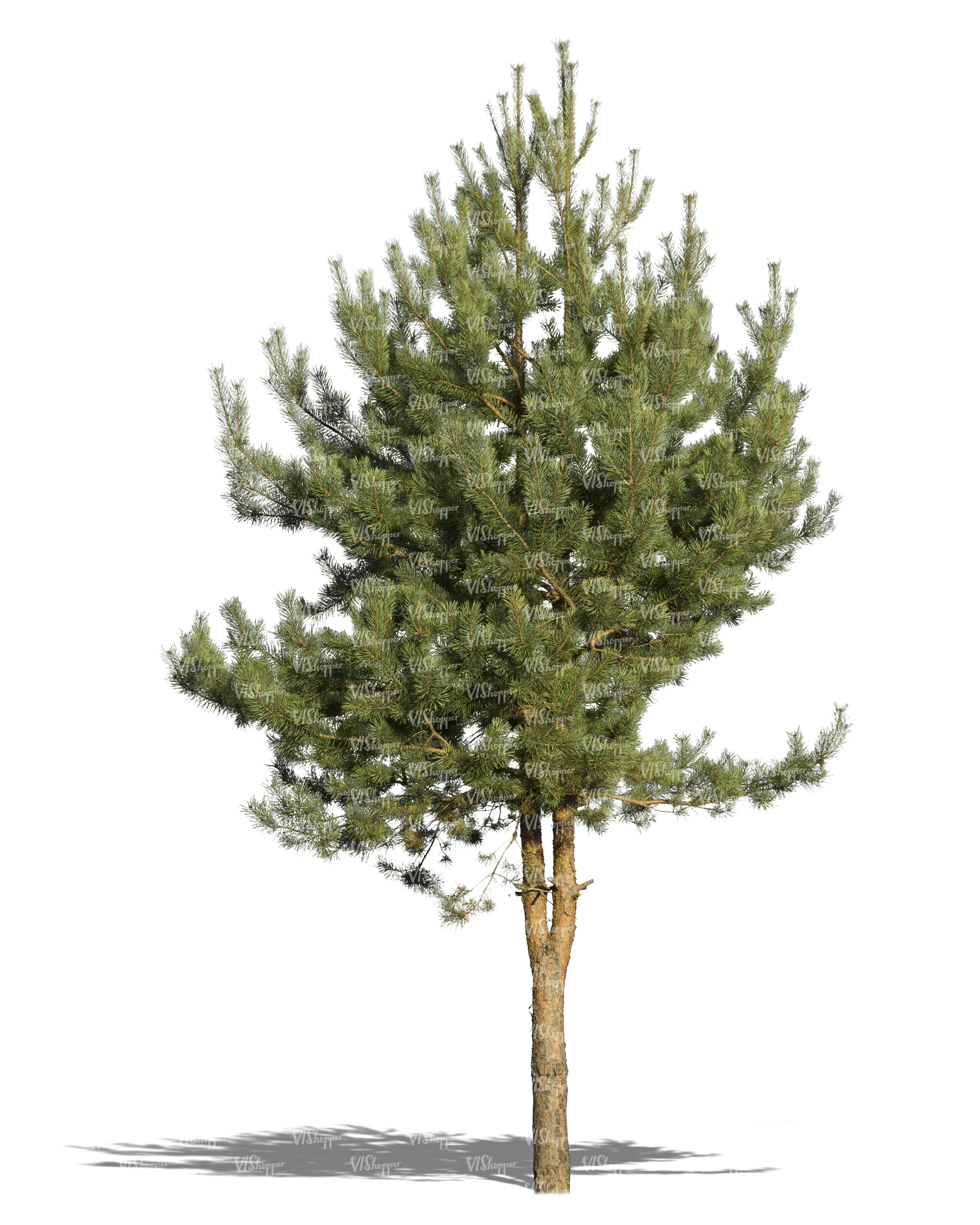 cut out small pine tree - cut out trees and plants - VIShopper