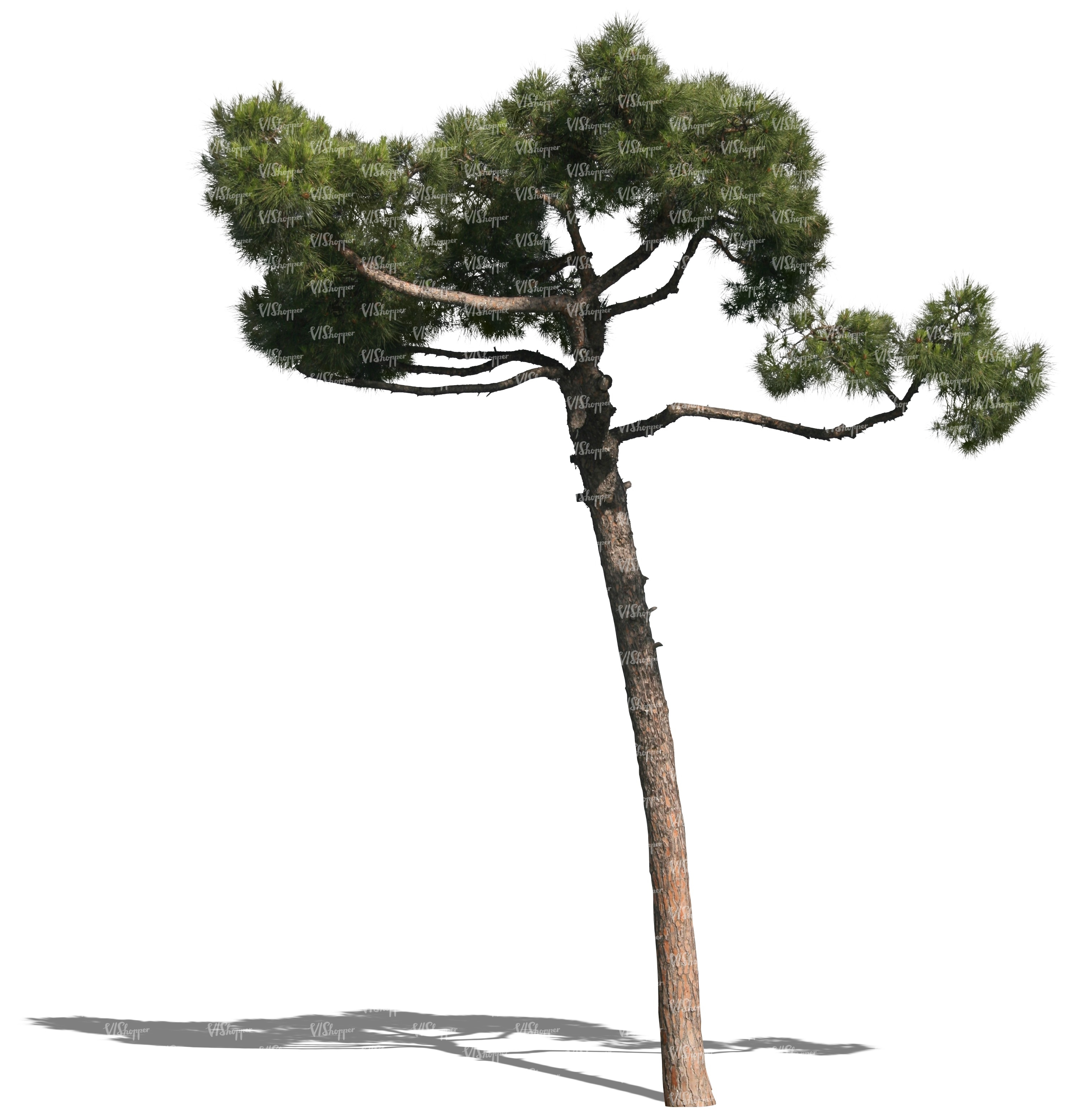 cut out small pine - cut out trees and plants - VIShopper