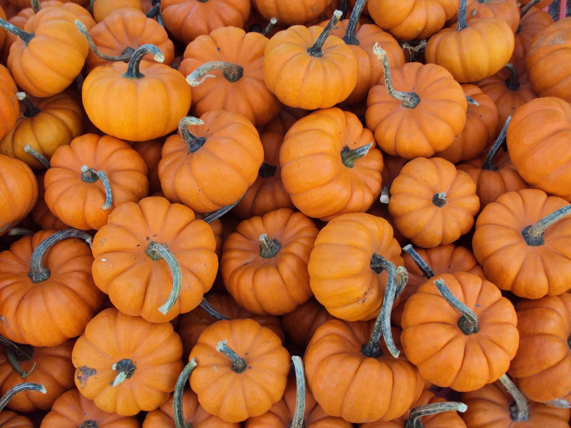 free photo small pumpkins small pumpkin fruit free download