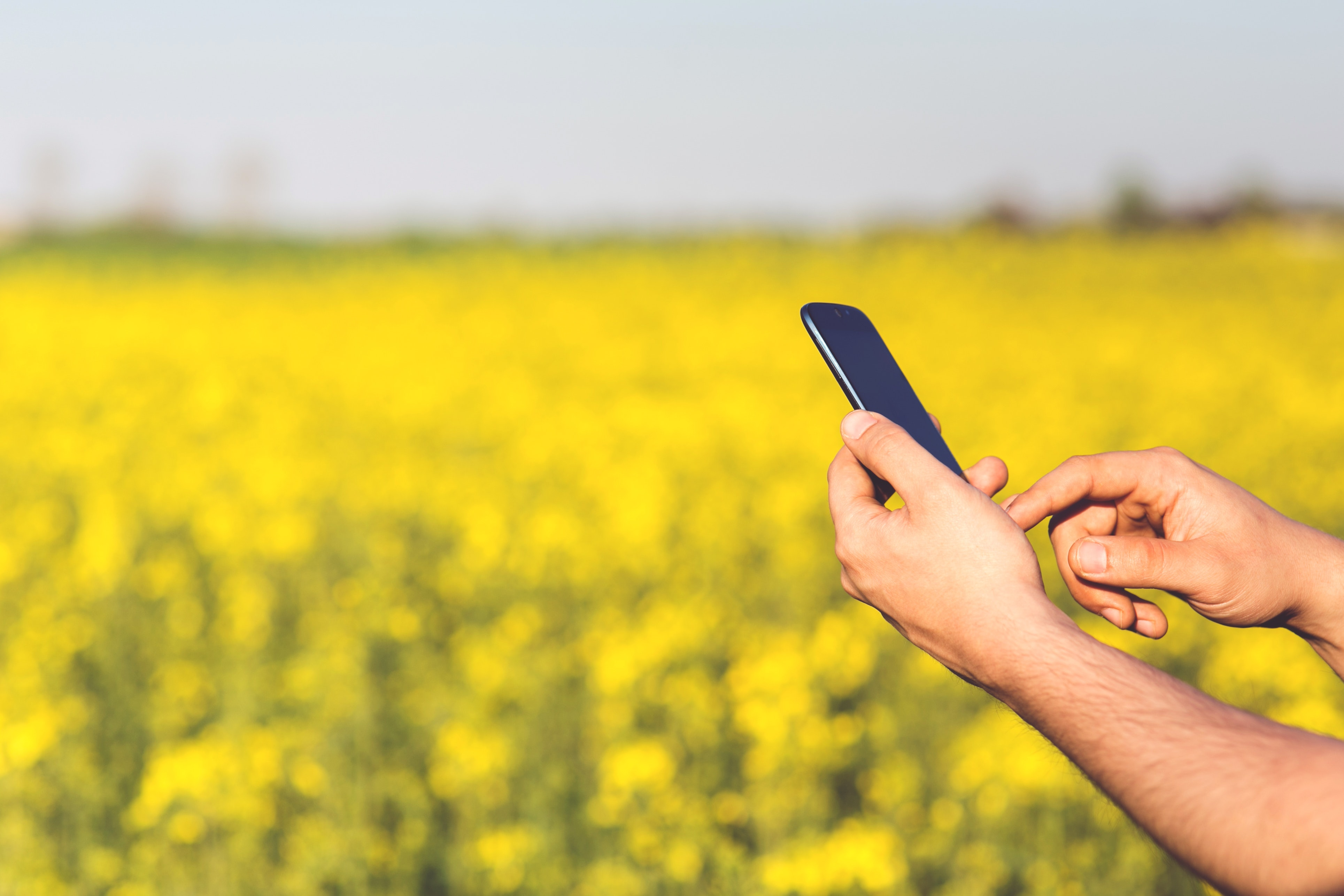 Smartphone Acer Jade S in the hands of a man on a background of yellow flowers, Acer, Agriculture, Environment, Field, HQ Photo