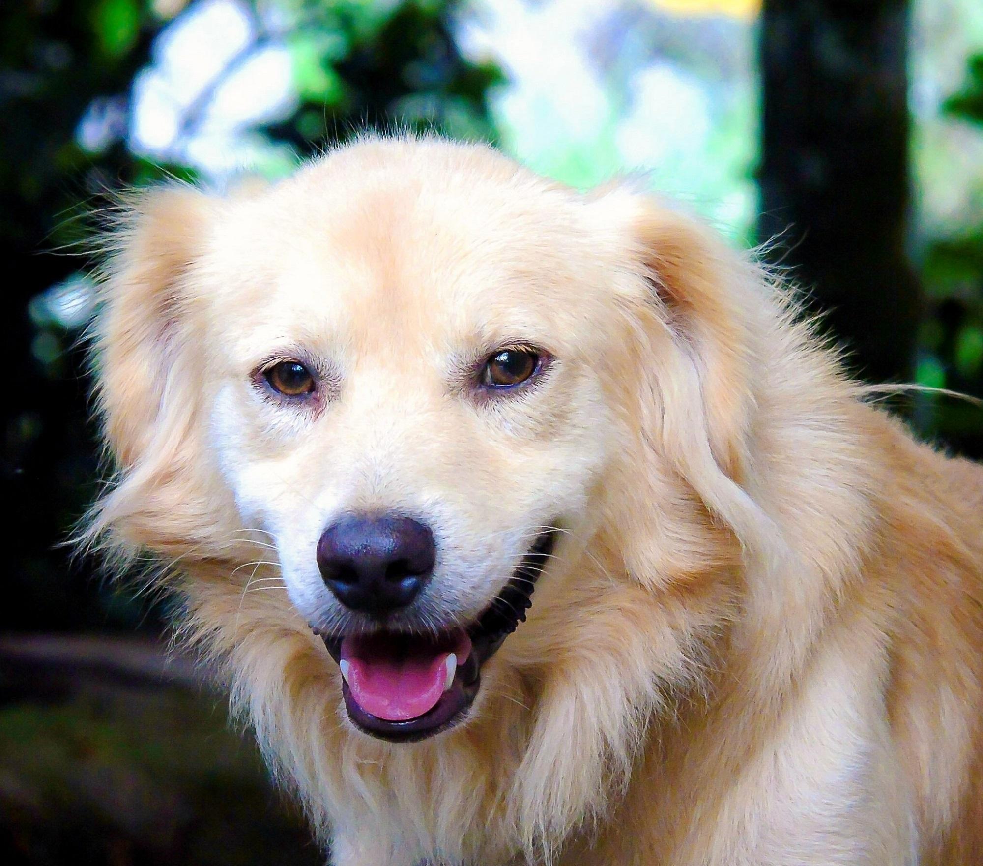 Smiling Dog, Animal, Dog, Friend, Loyal, HQ Photo