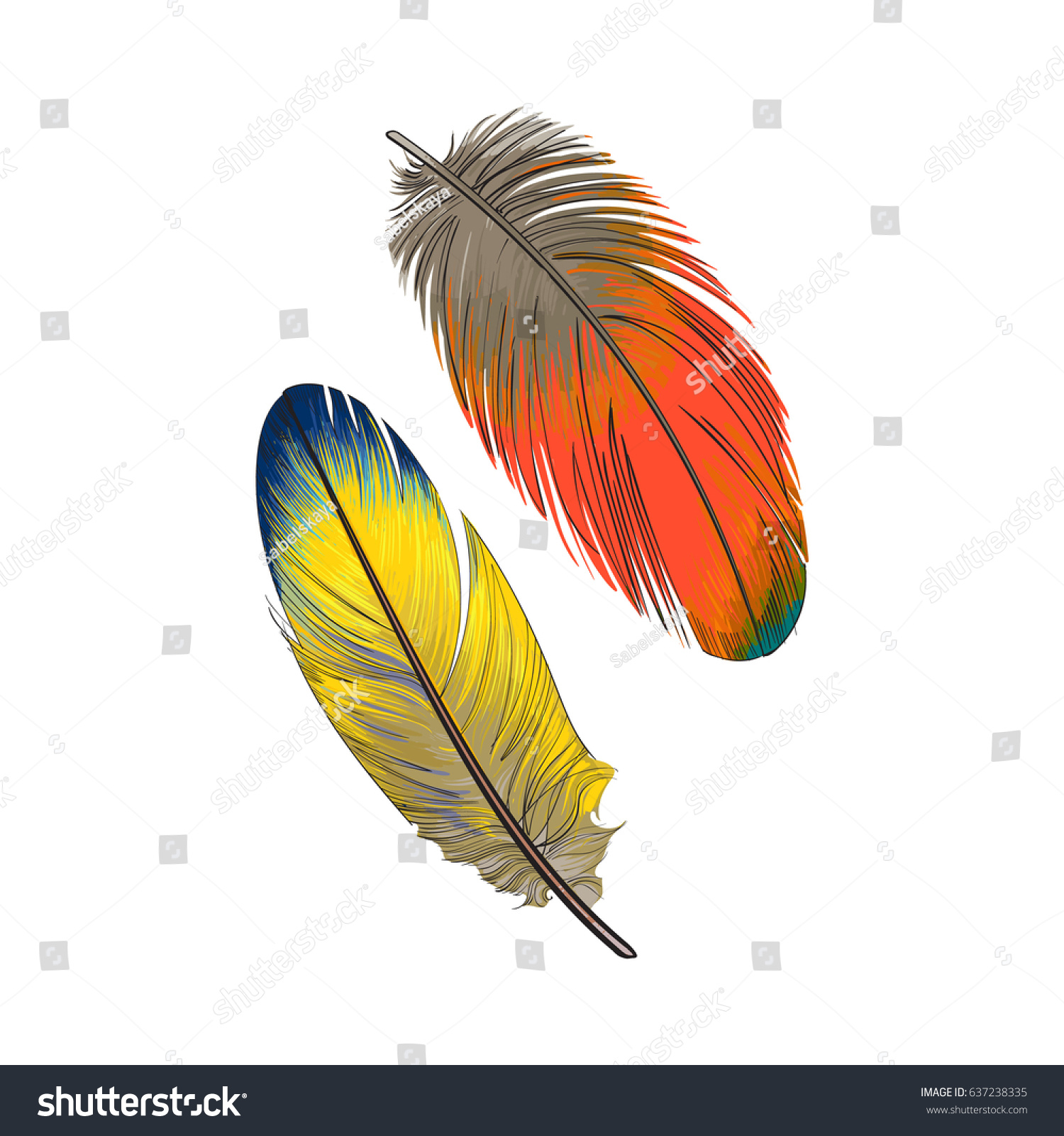 Smooth feather photo