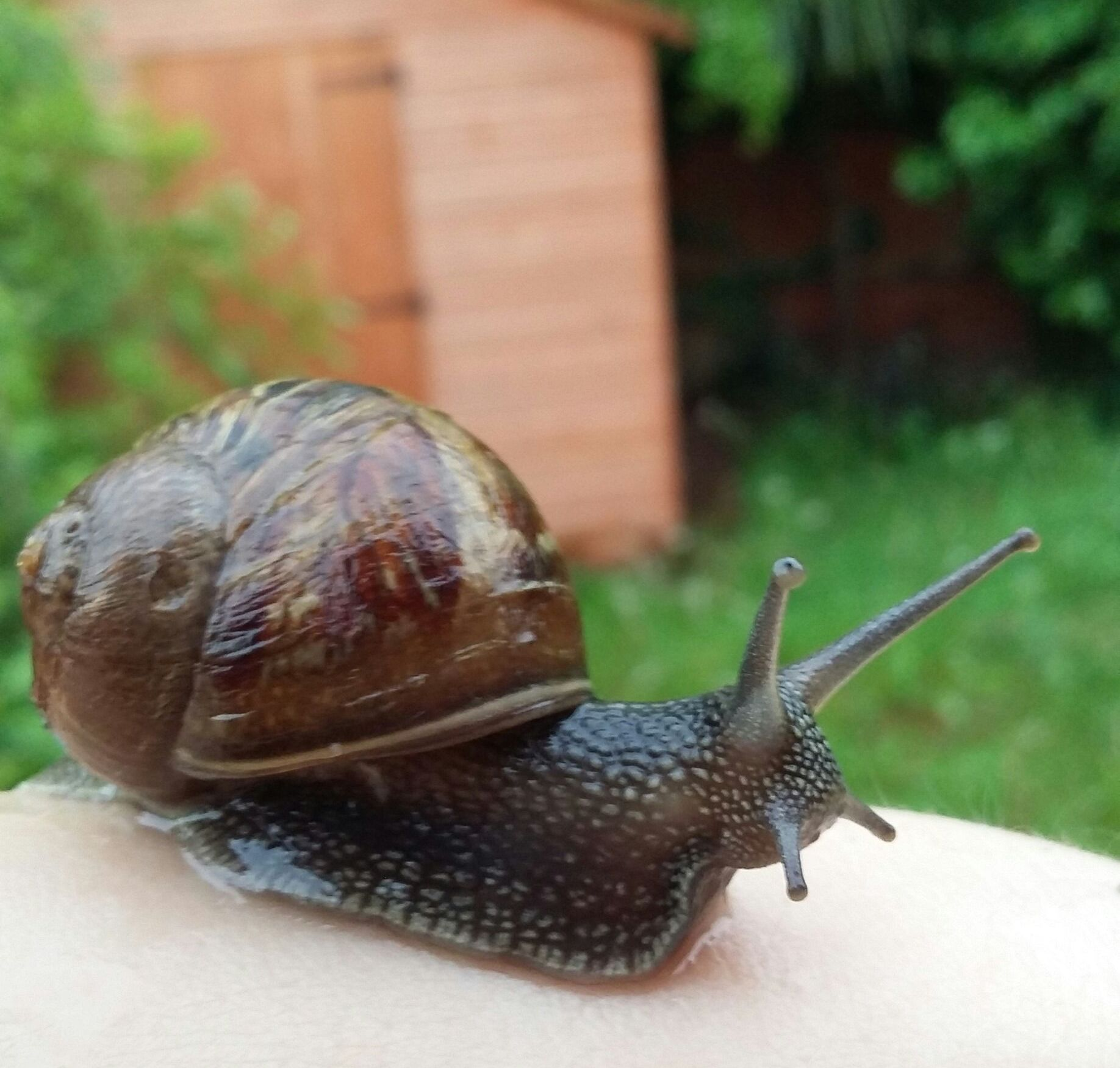 Snail on paw photo