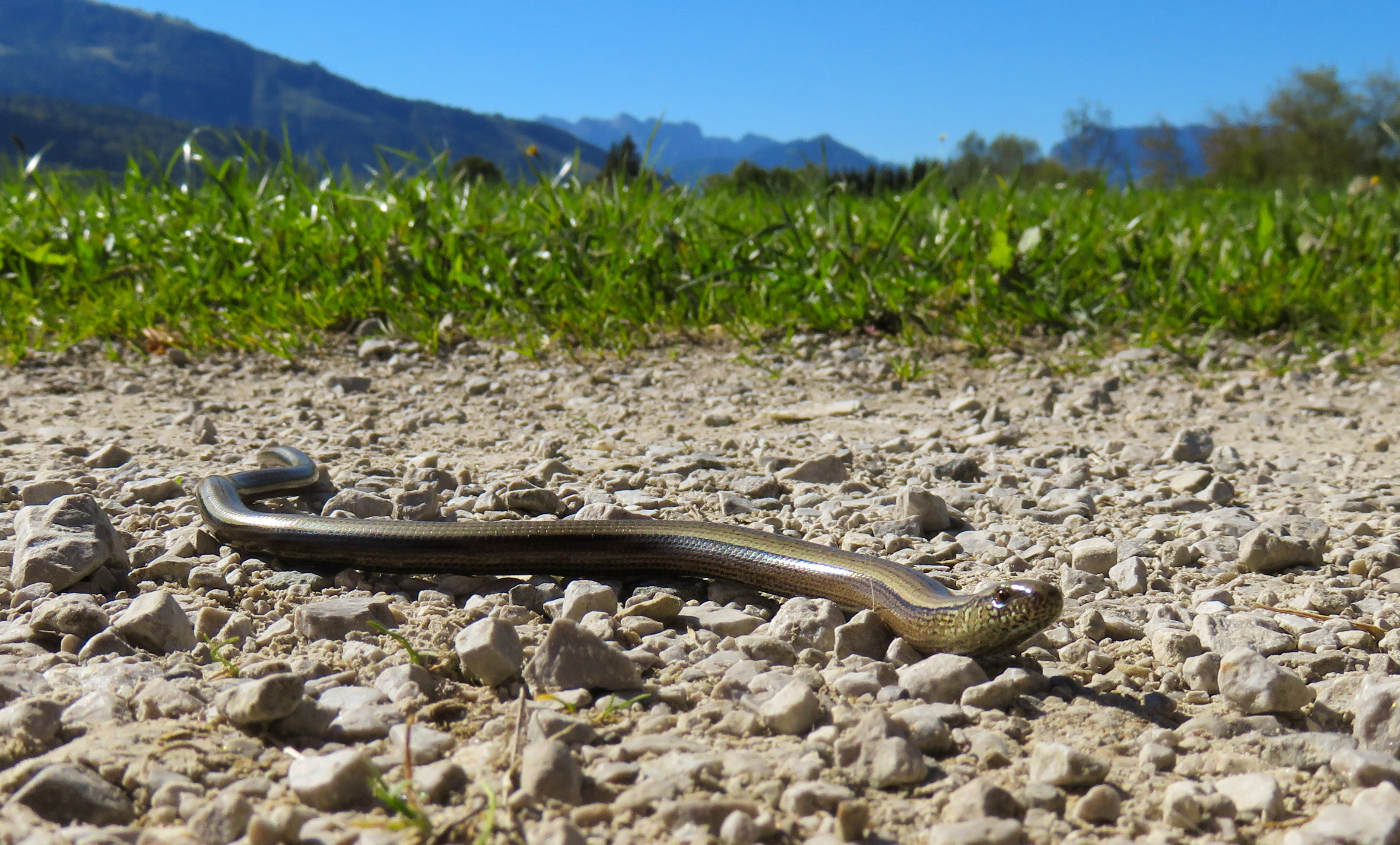 Snake in the Path, Animal, Jungle, Nature, Path, HQ Photo