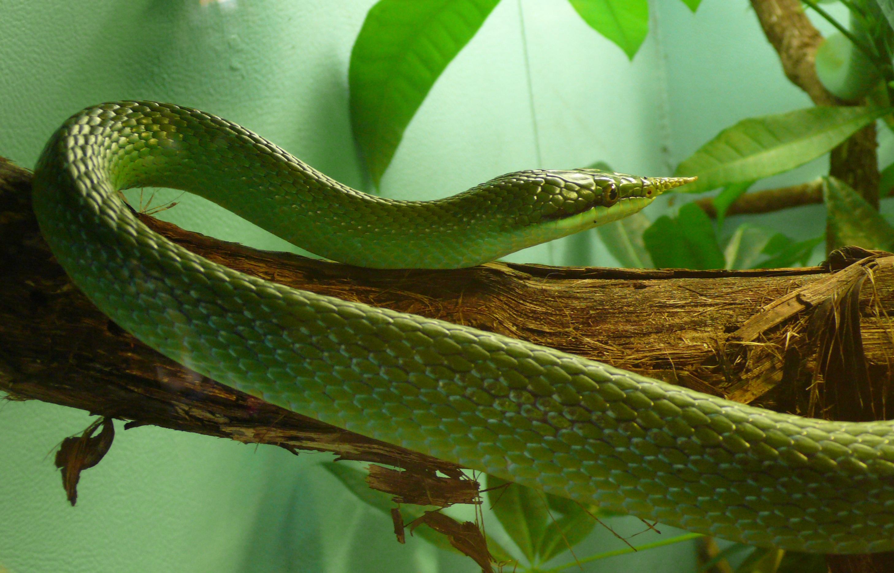 Snake on the tree photo