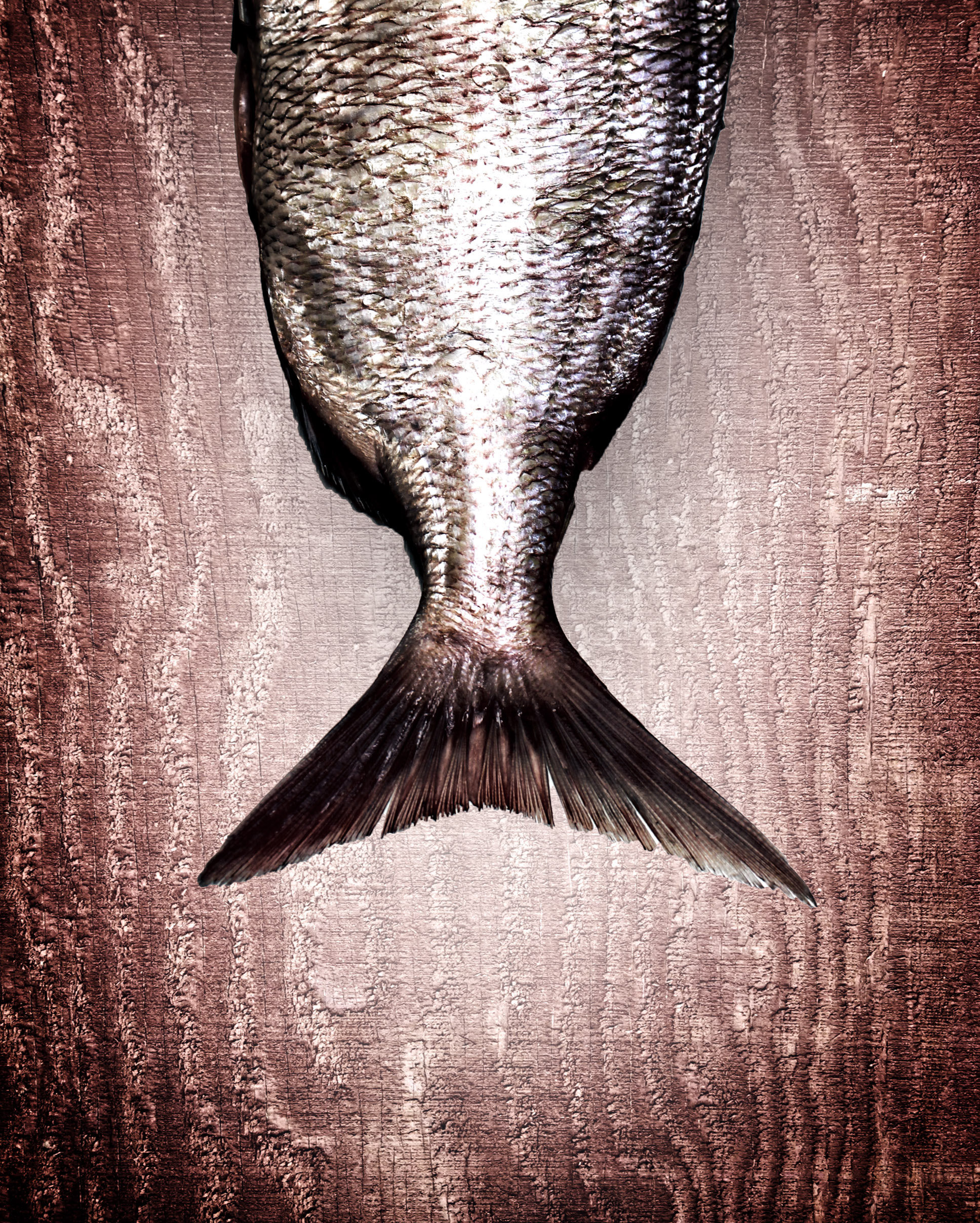 Snapper fish tail on red wood background - healthy eating photo