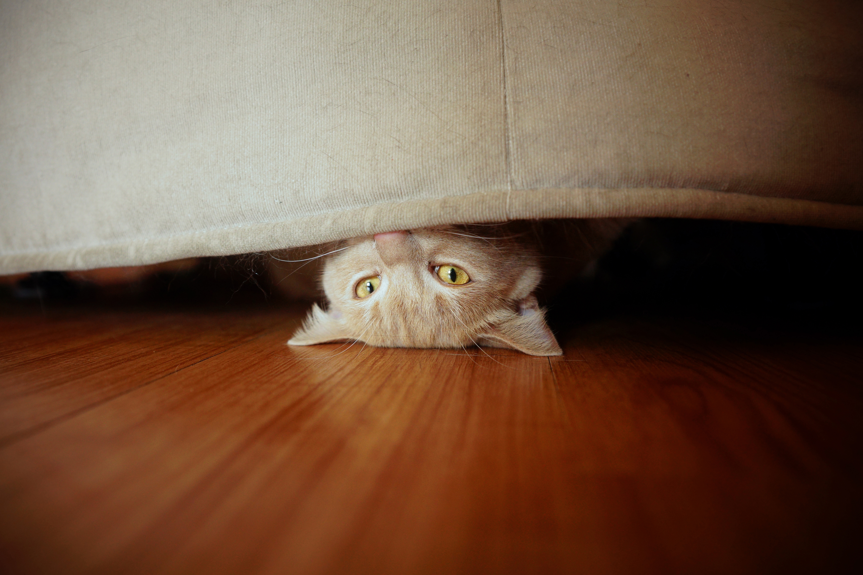 Sneaky cat - Mix 106.9
