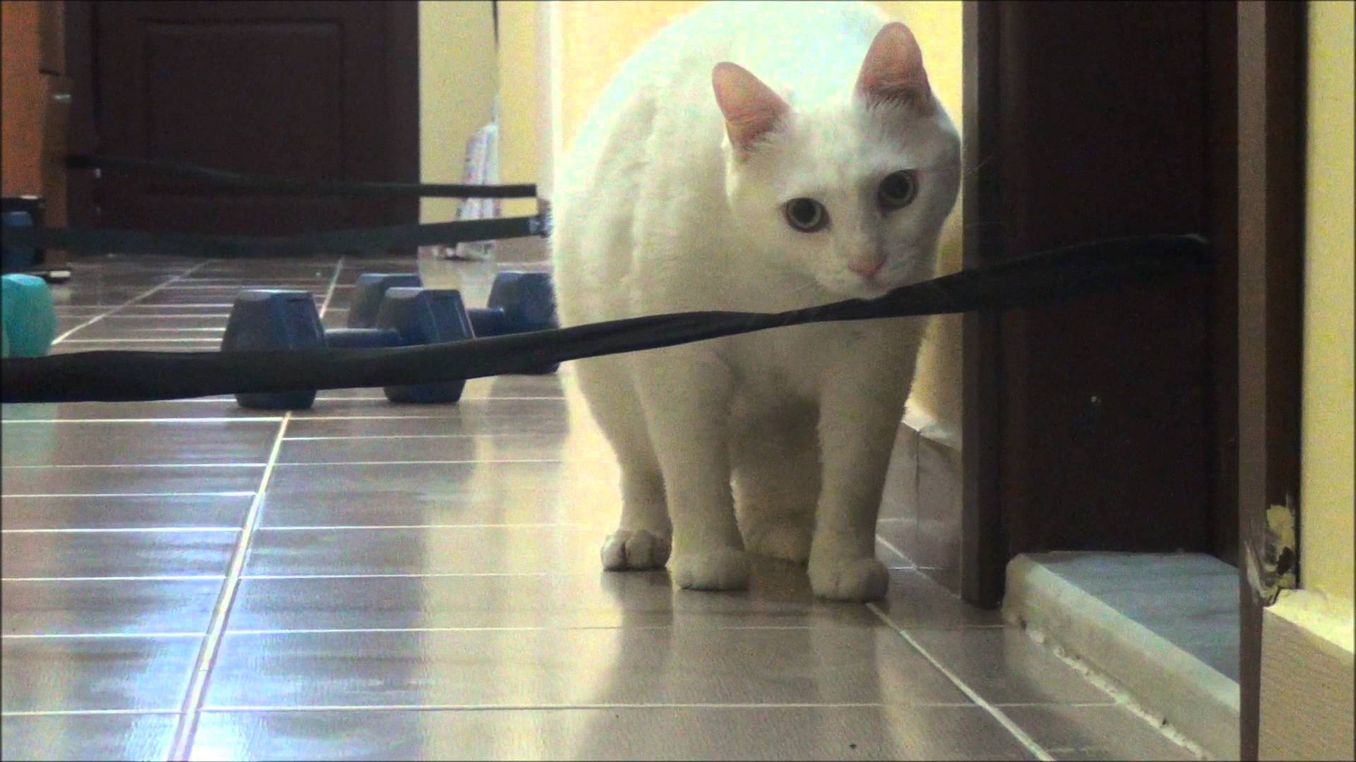 Sneaky cat vs waggling prey - YouTube