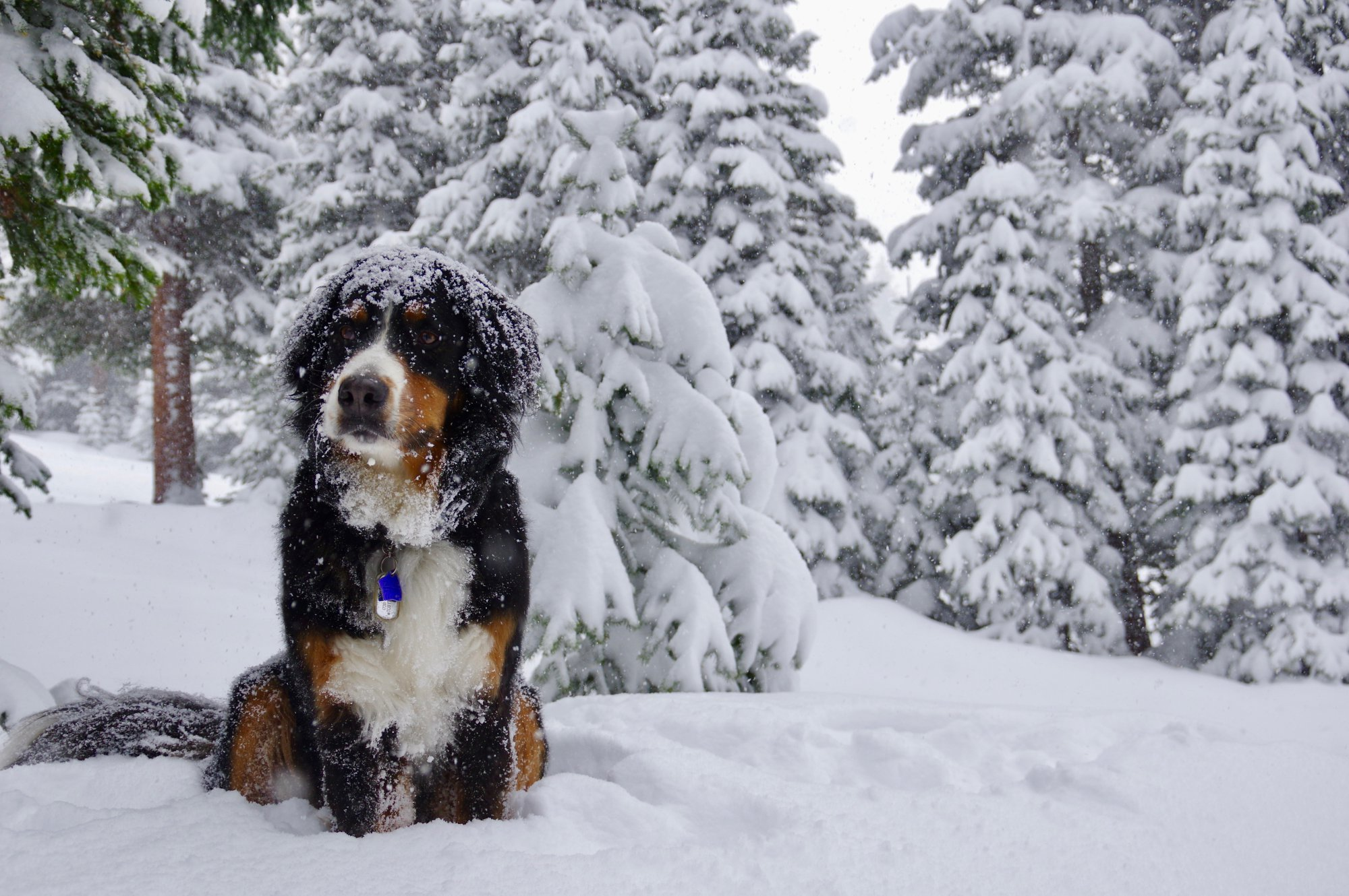 Snow photos: Late spring storm dumps snow in foothills, mountains ...
