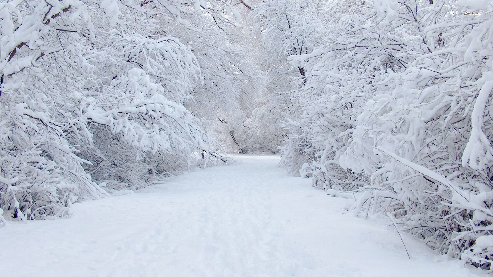 Image - 6670-perfect-snow-1920x1080-nature-wallpaper.jpg | Lab Rats ...