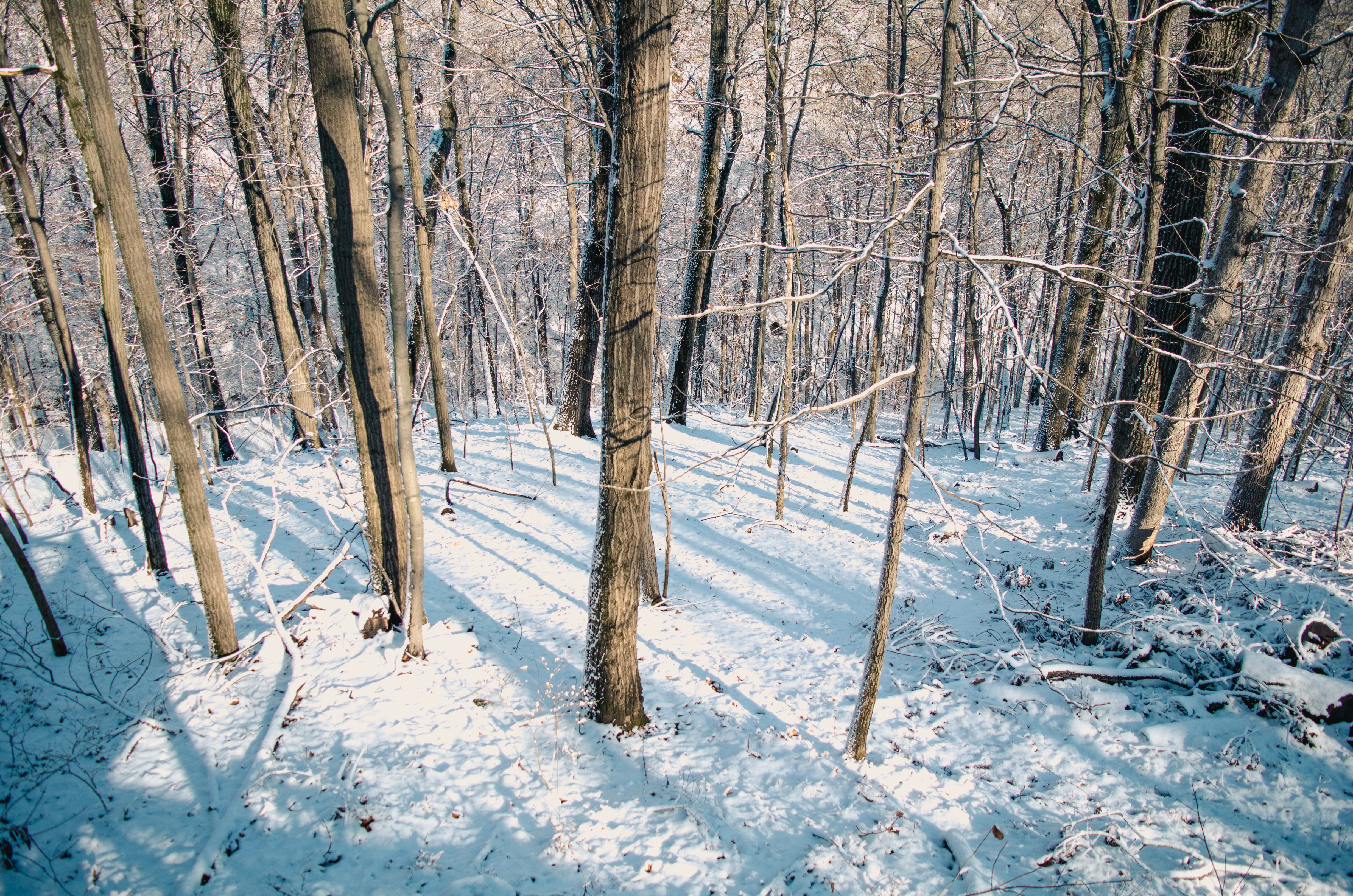 Snow Covered Forest, Cold, Scene, Wood, Winter, HQ Photo