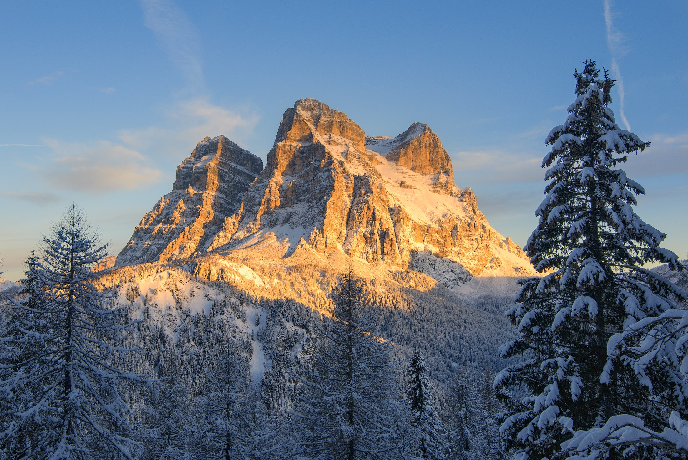 Snow covered mountain with pine trees photo