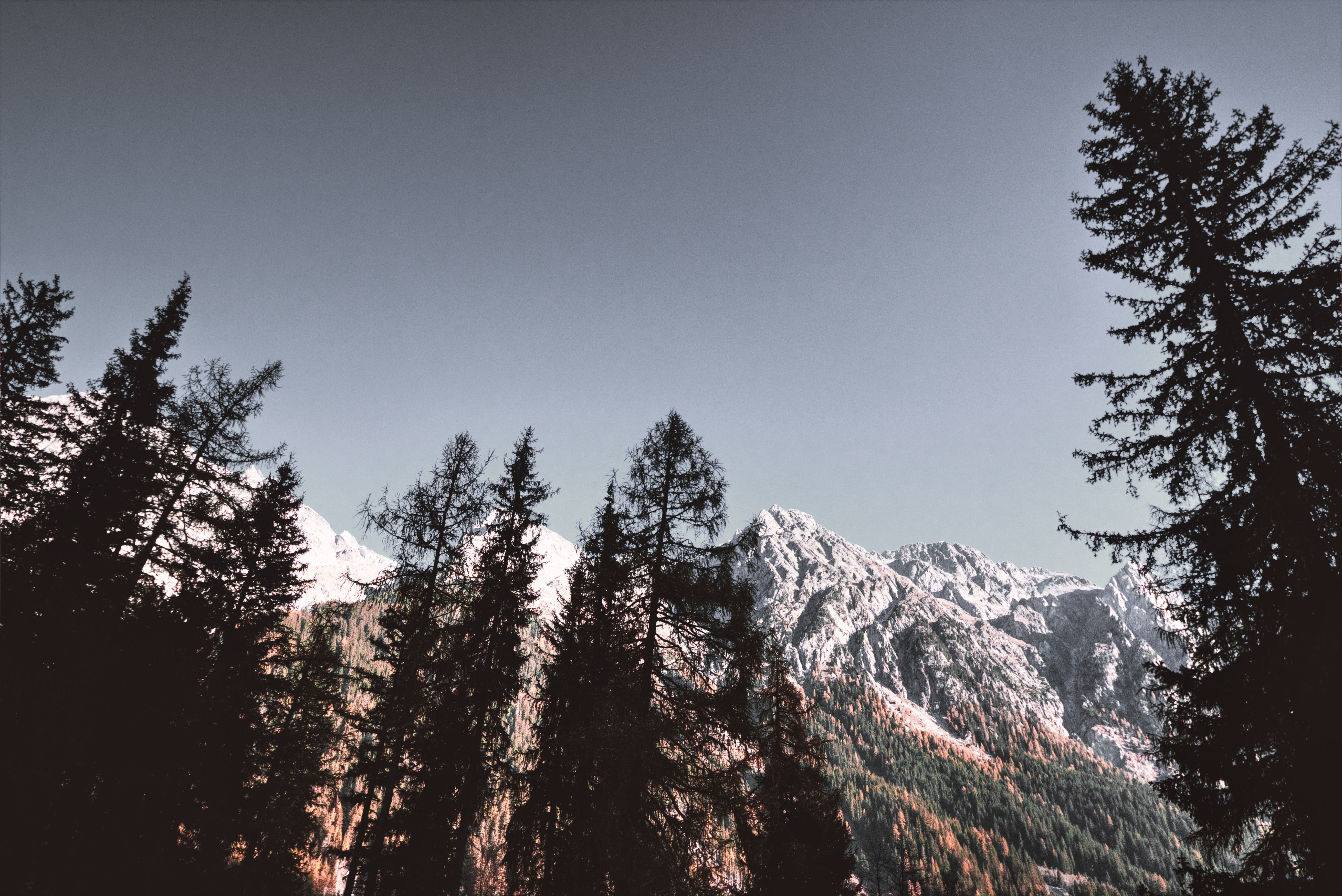 Snow Covered Mountains, Adventure, Low angle shot, Winter, Trees, HQ Photo