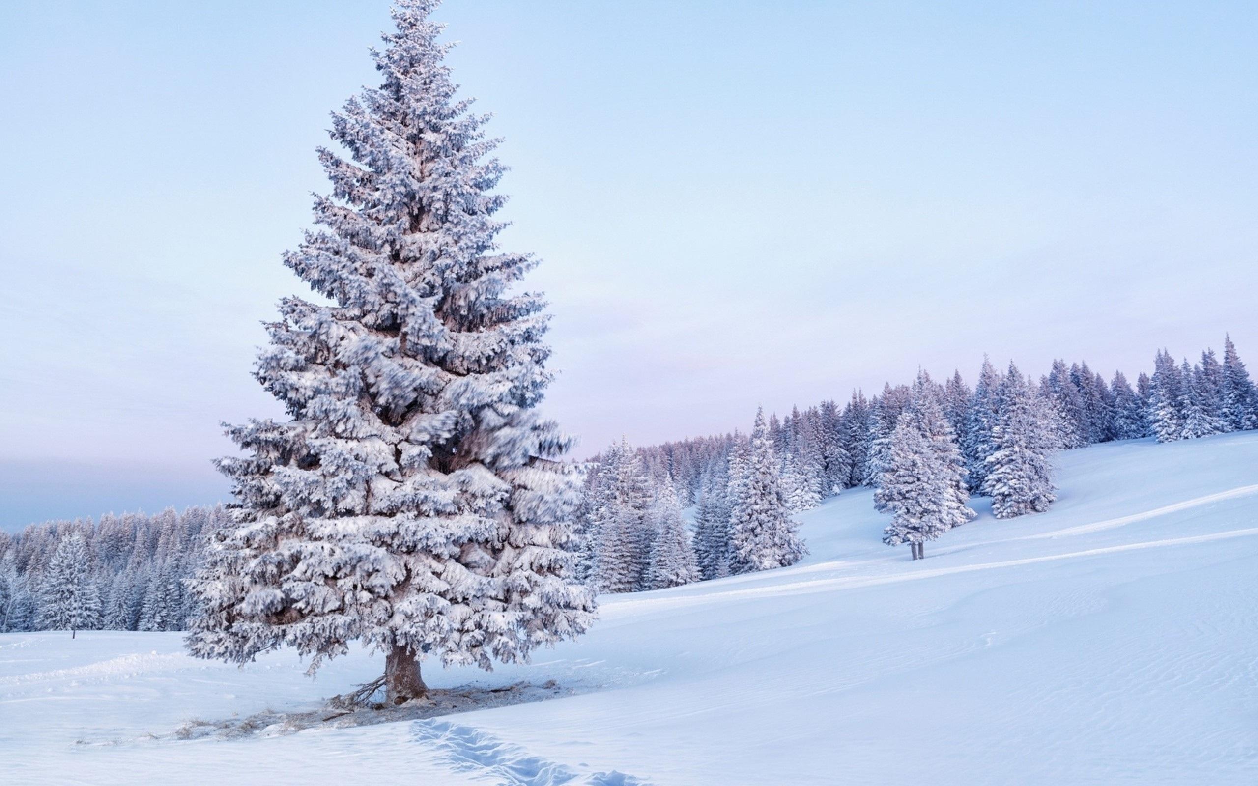 Free photo: Snow tree - Bspo06, Christmas, Cold - Free ...