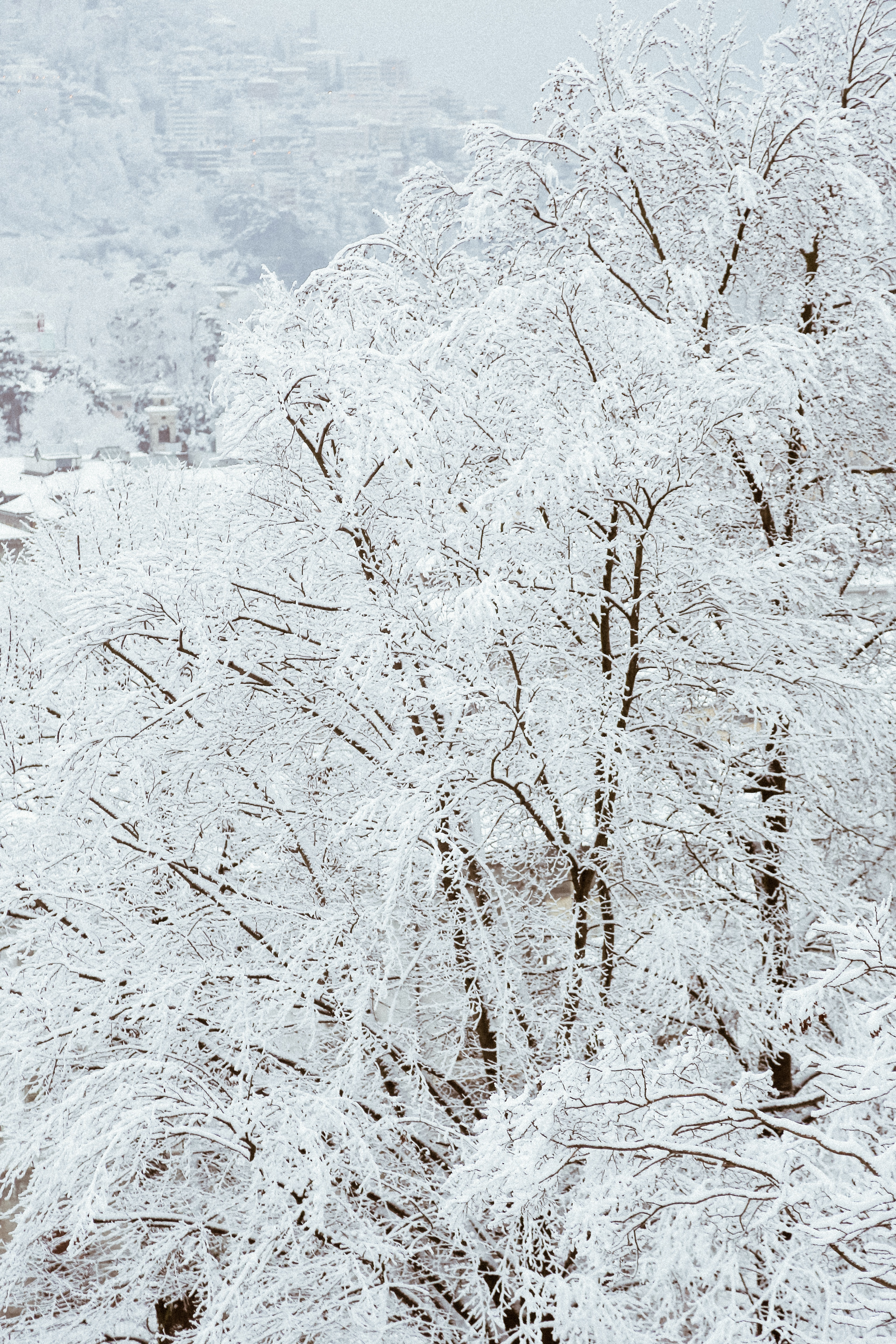 Snow Covered Trees, Outdoors, Wood, Winter, White, HQ Photo
