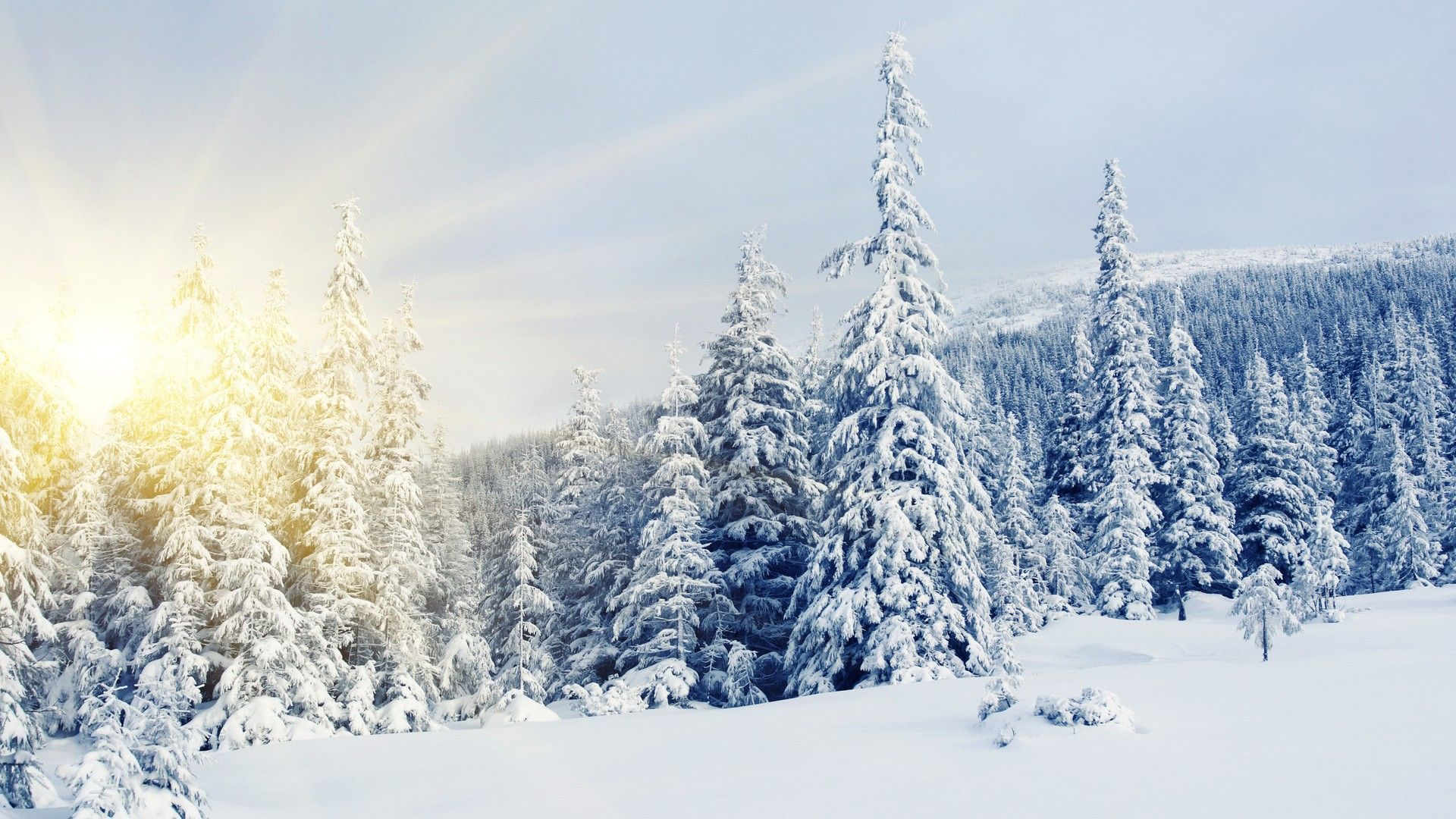 A Letter To Heaven | Snow images, Snow forest and Snow covered trees
