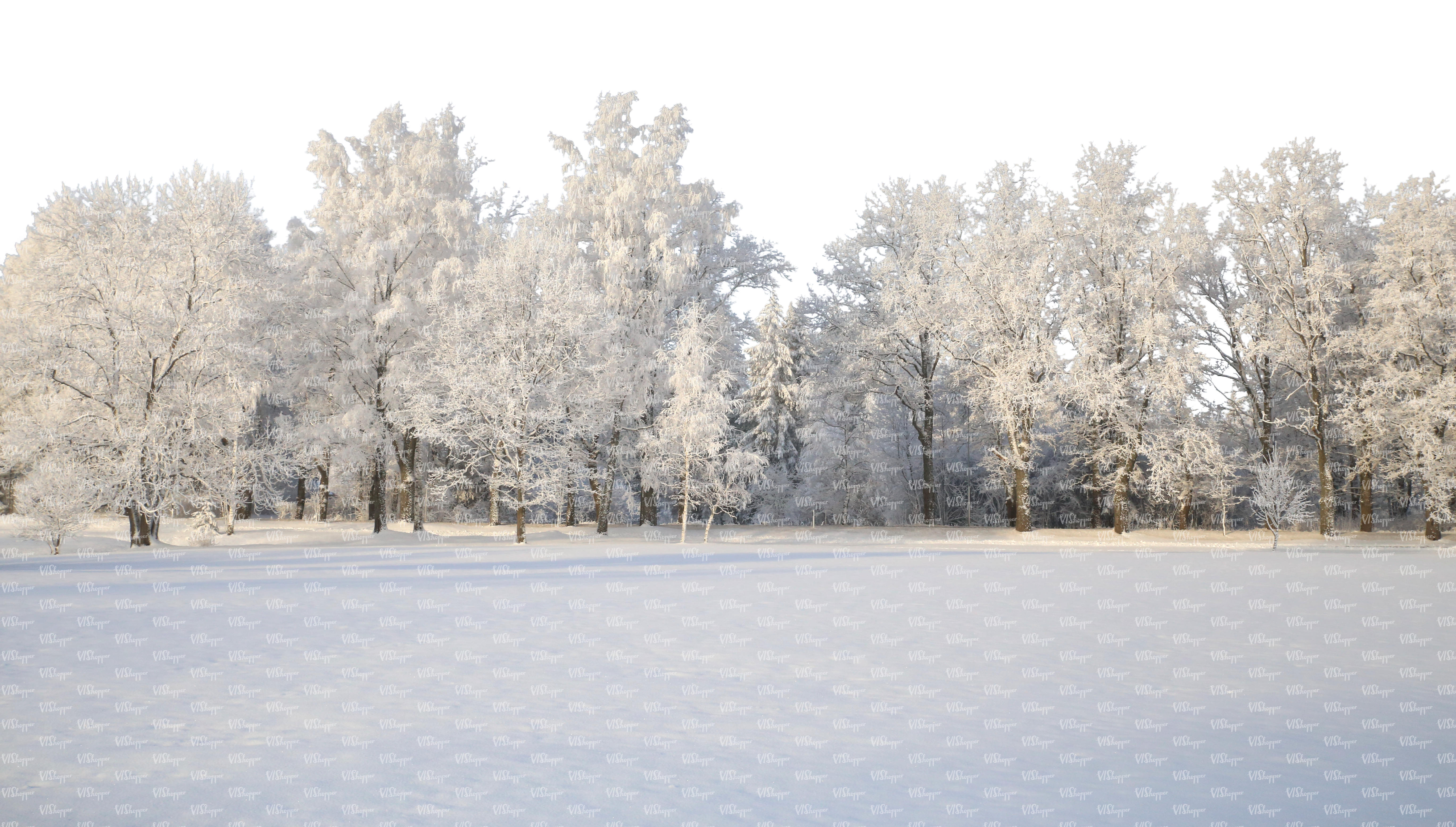 cut out background with snow covered trees - cut out backgrounds ...