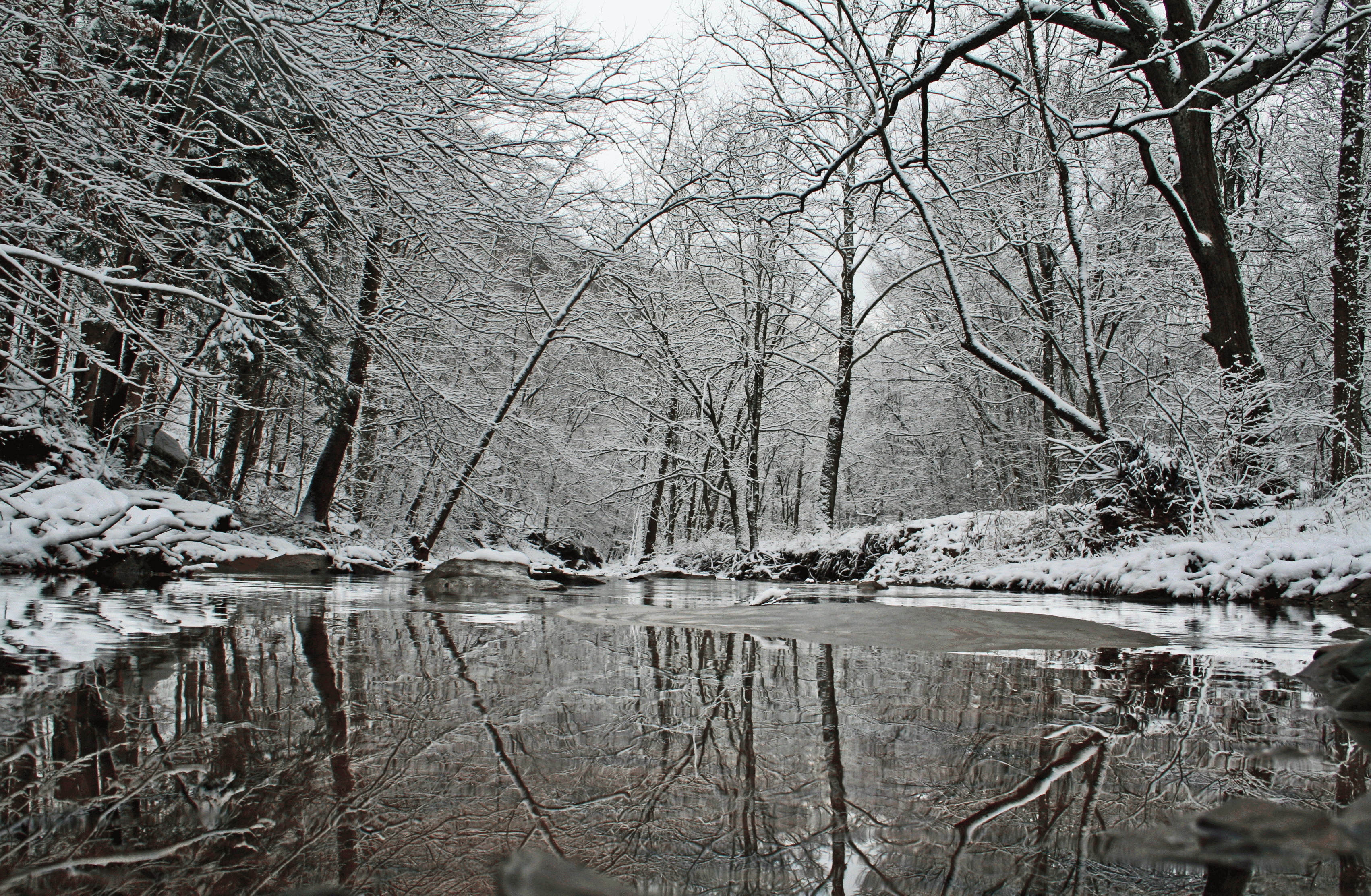 Winter Creek Reflection Snow Covered Trees | Creeks & Streams| Free ...