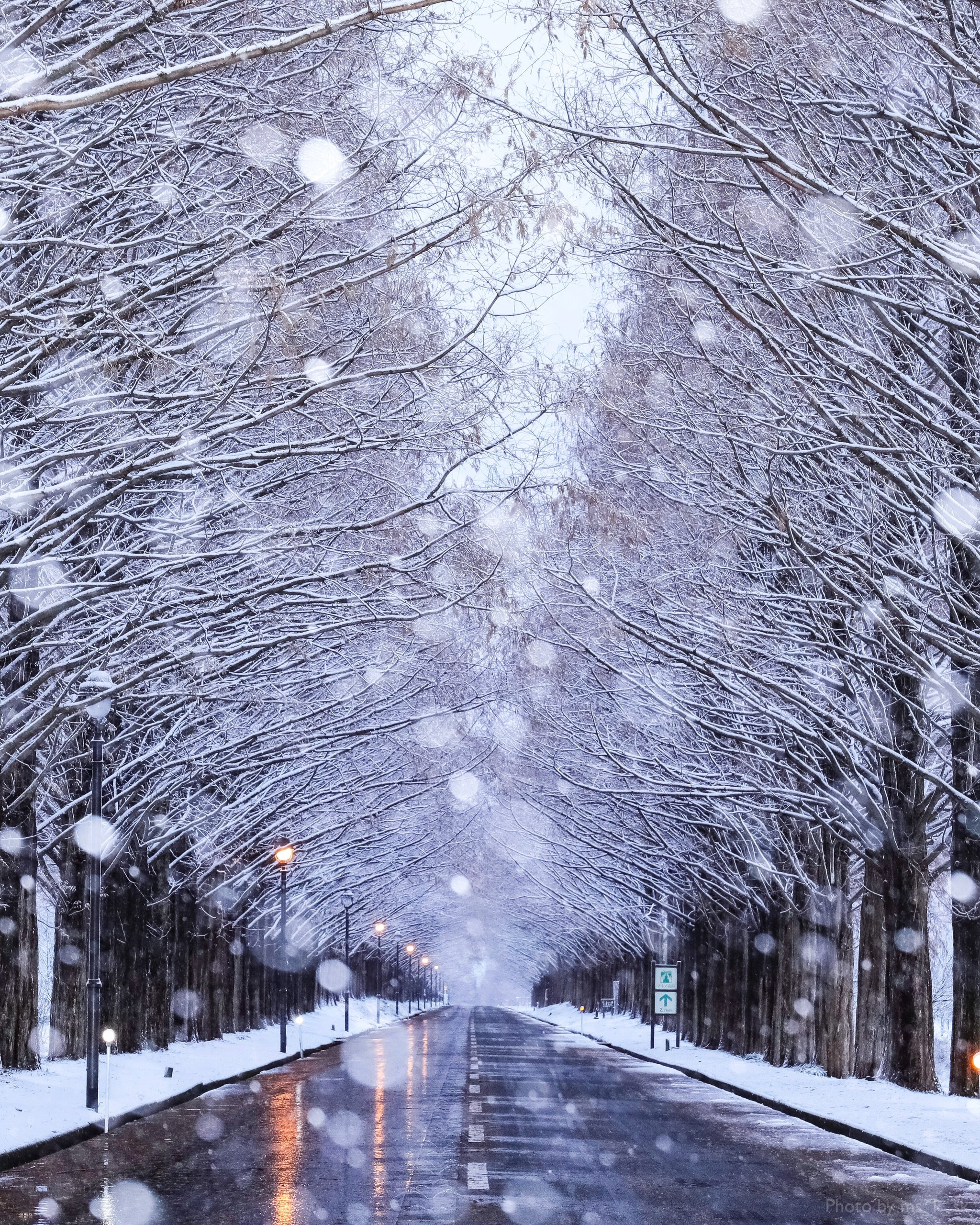 Snow-covered Trees - THE MAJESTIC ART GALLERY