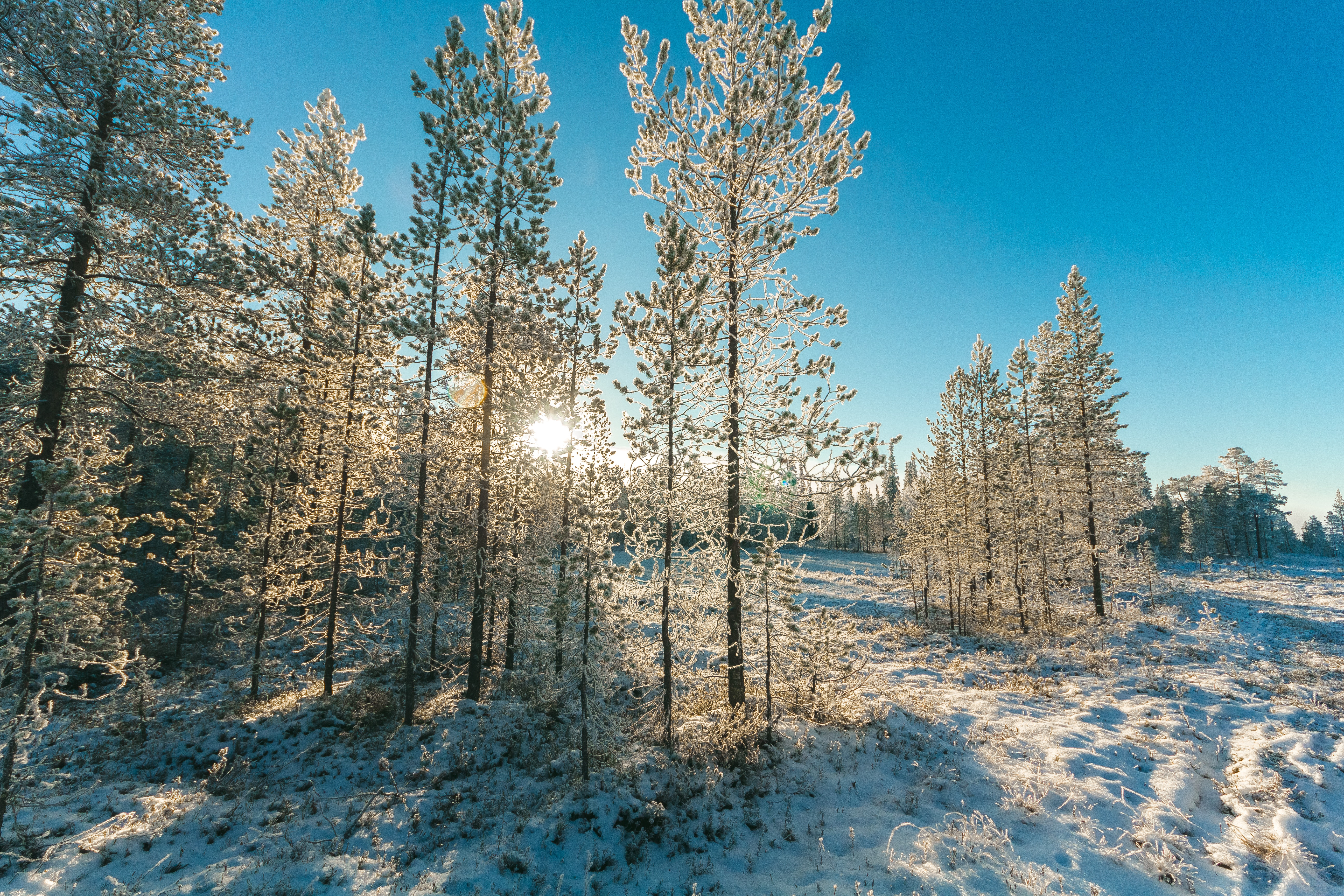 Snow Covered Trees and Mountain Slope, Branches, Pines, Winter landscape, Winter, HQ Photo
