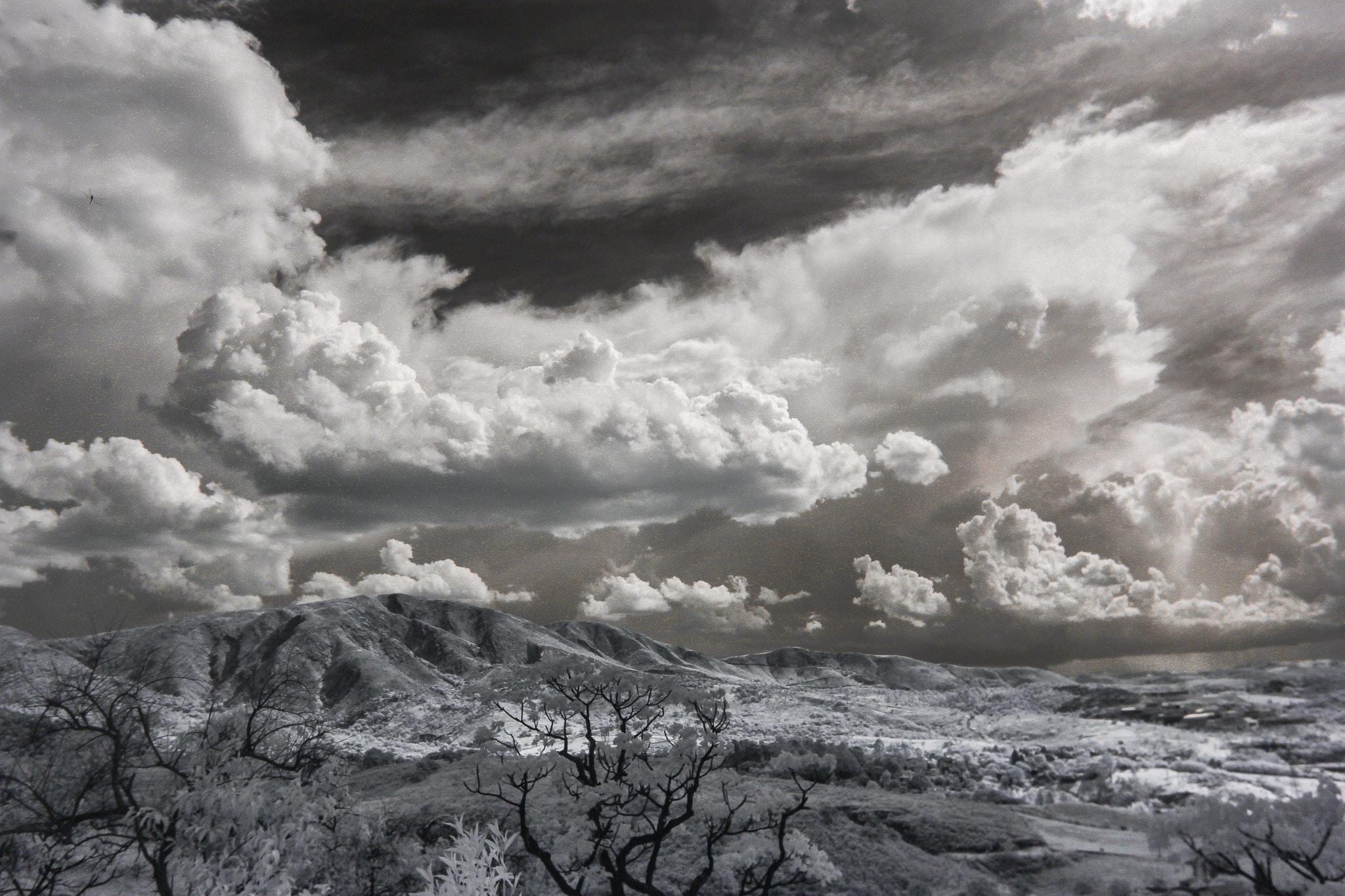 Snow covered trees under cumulonimbus clouds photo