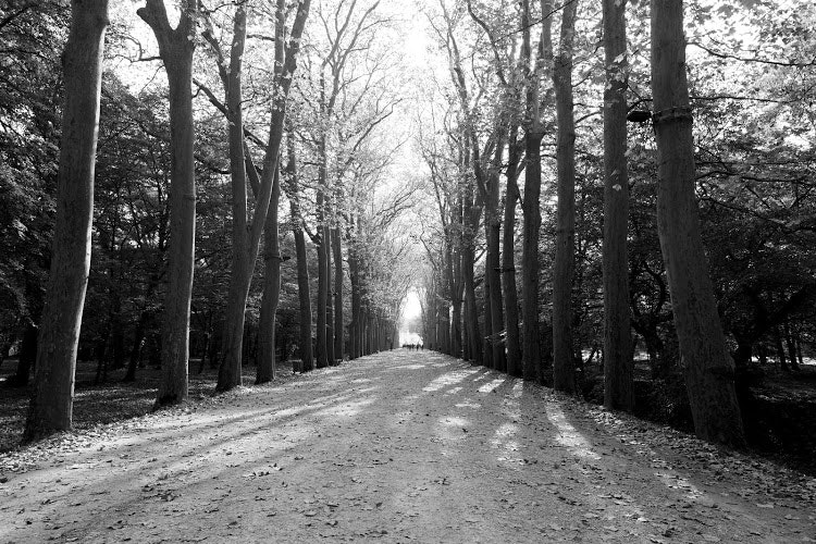 Snow Path Beside Tall Trees, Black-and-white, Leaves, Nature, Road, HQ Photo