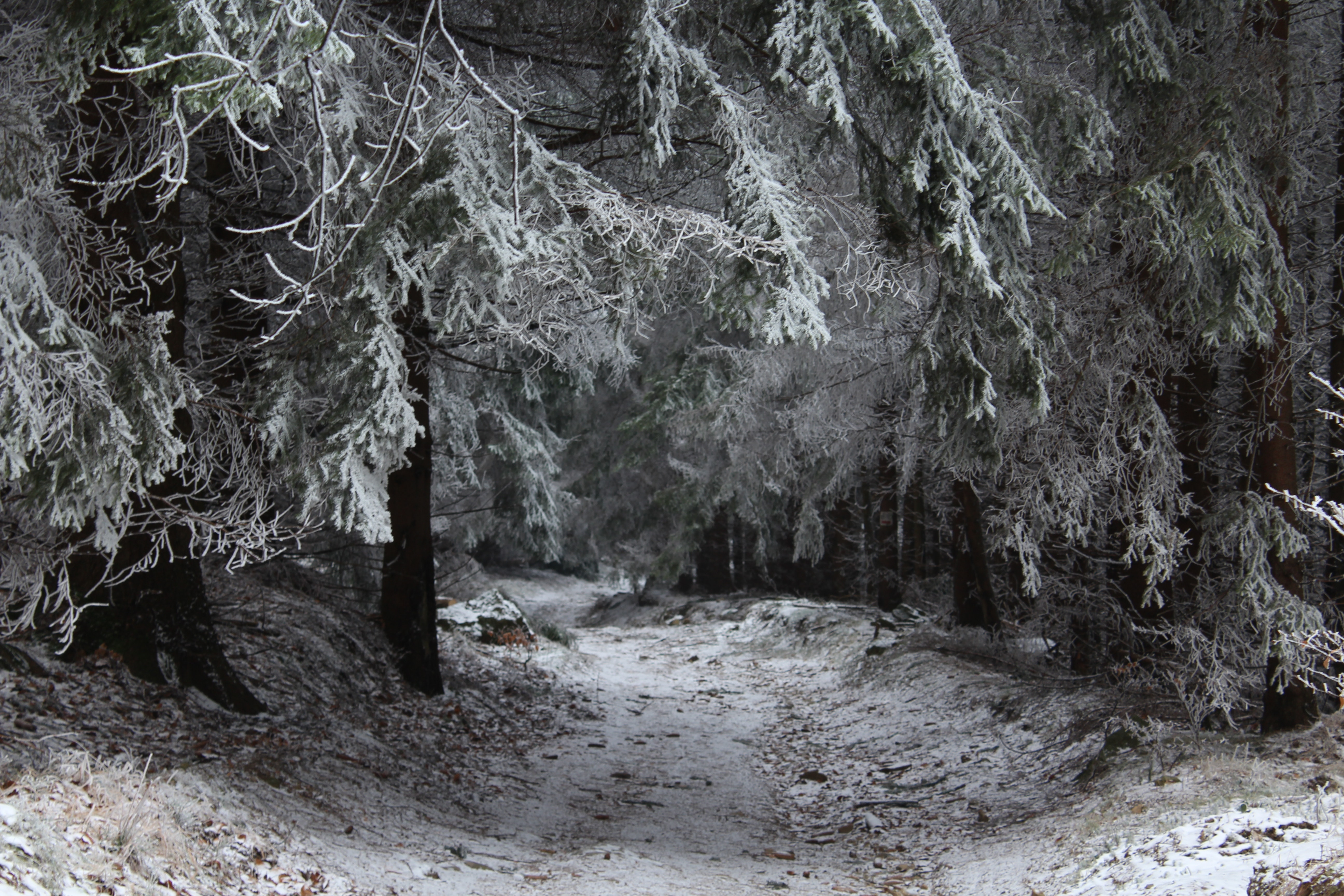 Snowcapped trees photo