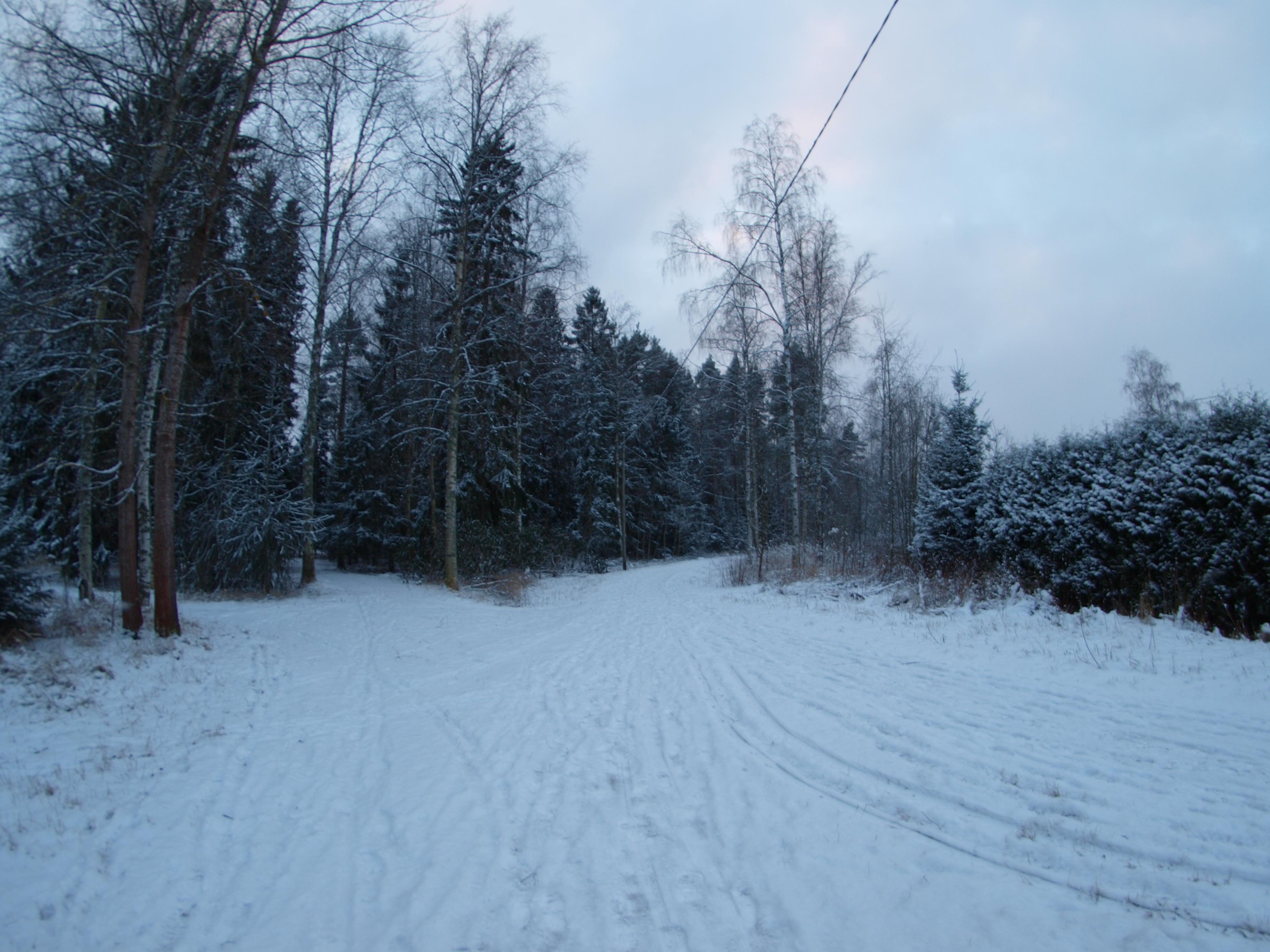 Snowy day photo