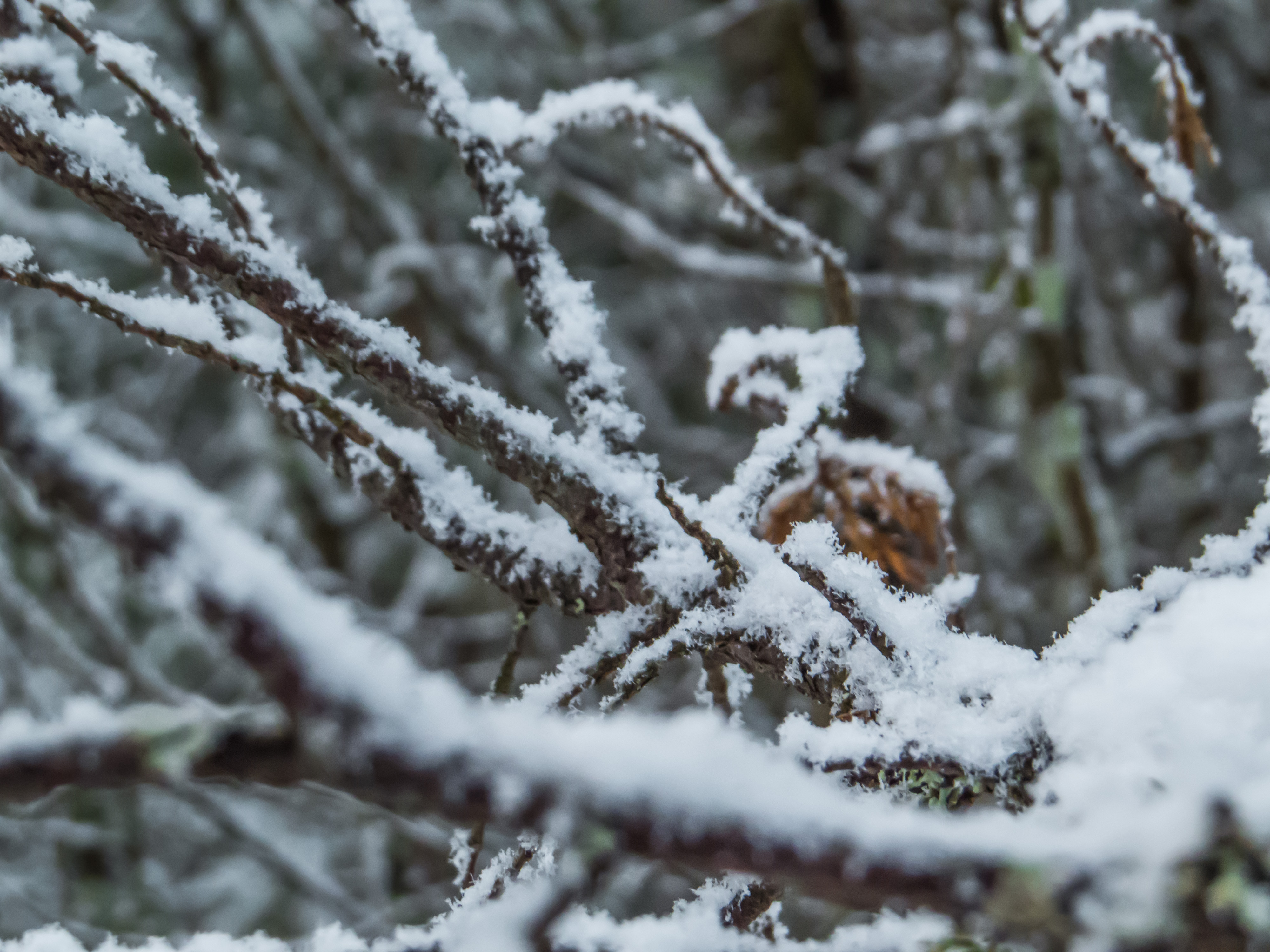 Snowy Forest, Woods, Snow, Nature, Plant, HQ Photo