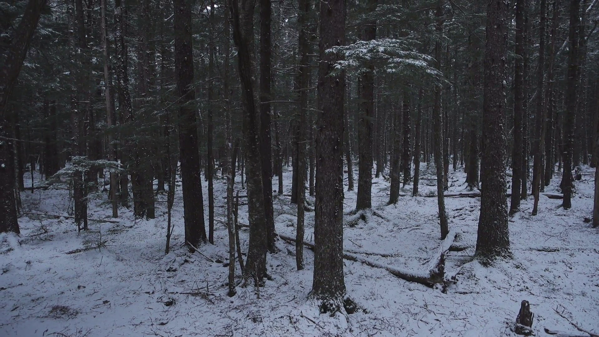Rising Up Through Dark Magical Snowy Forest in Winter Aerial Stock ...