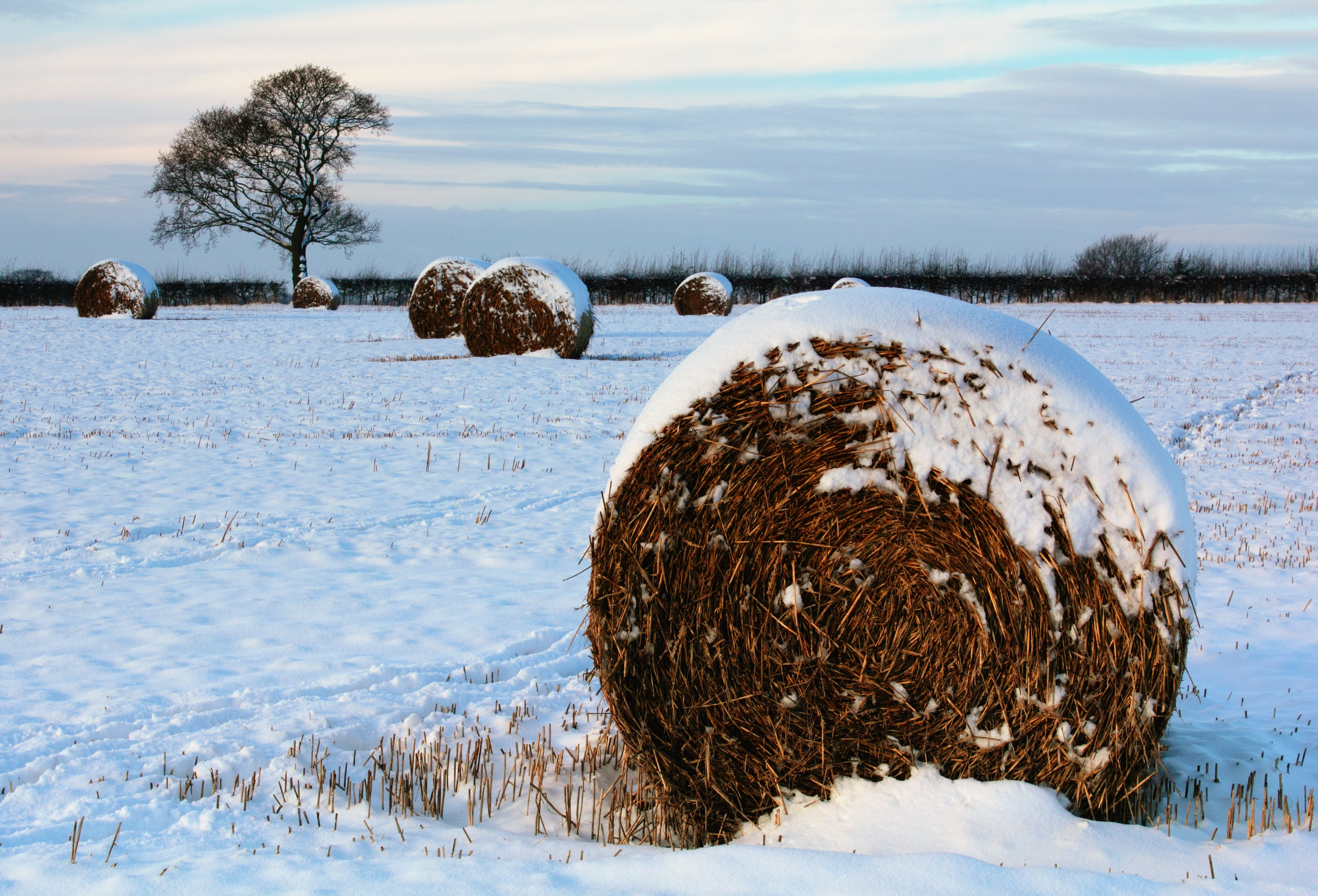 Snowy hay field photo