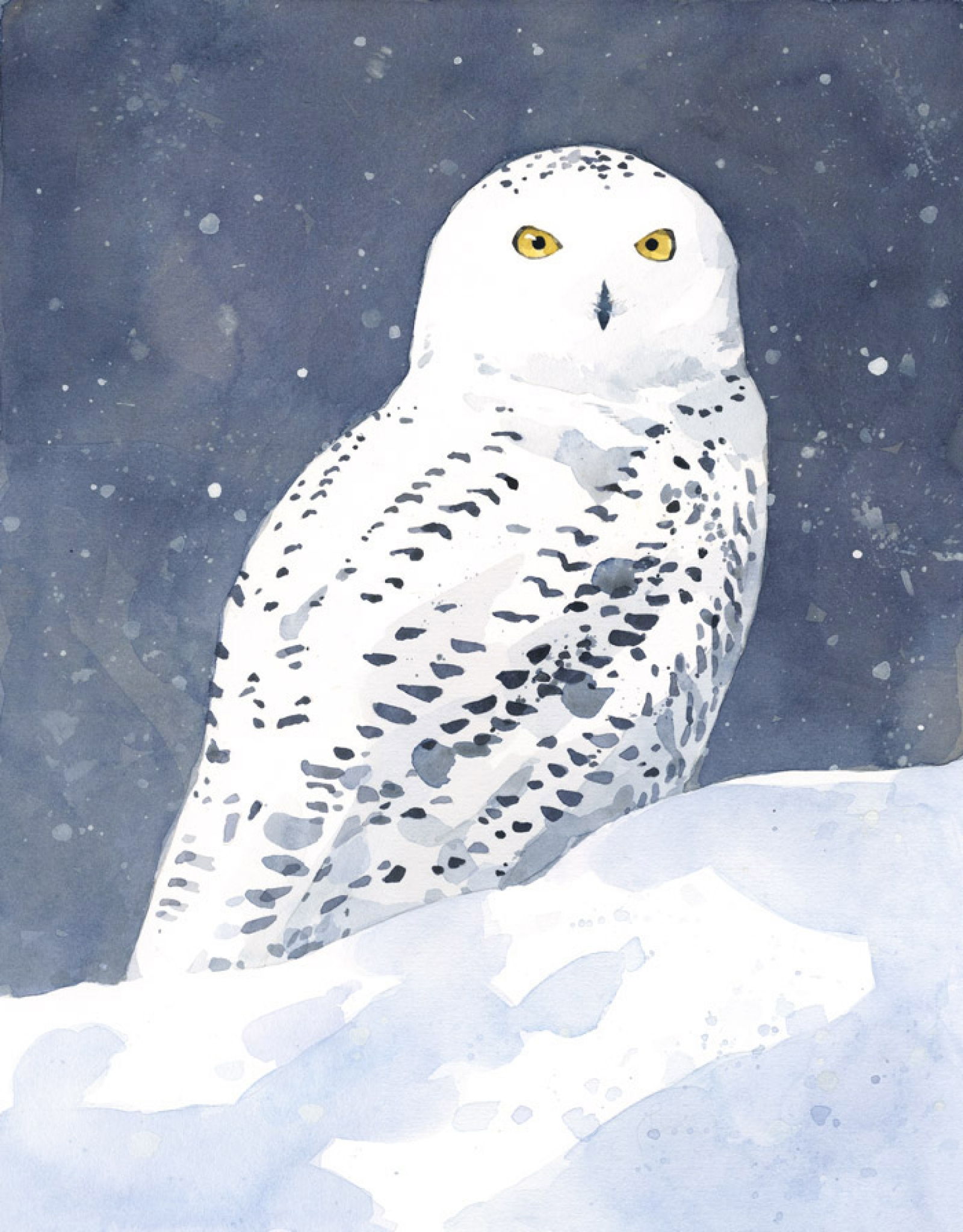 Snowy Owl Watercolor Art Print 11x14 | david scheirer watercolors