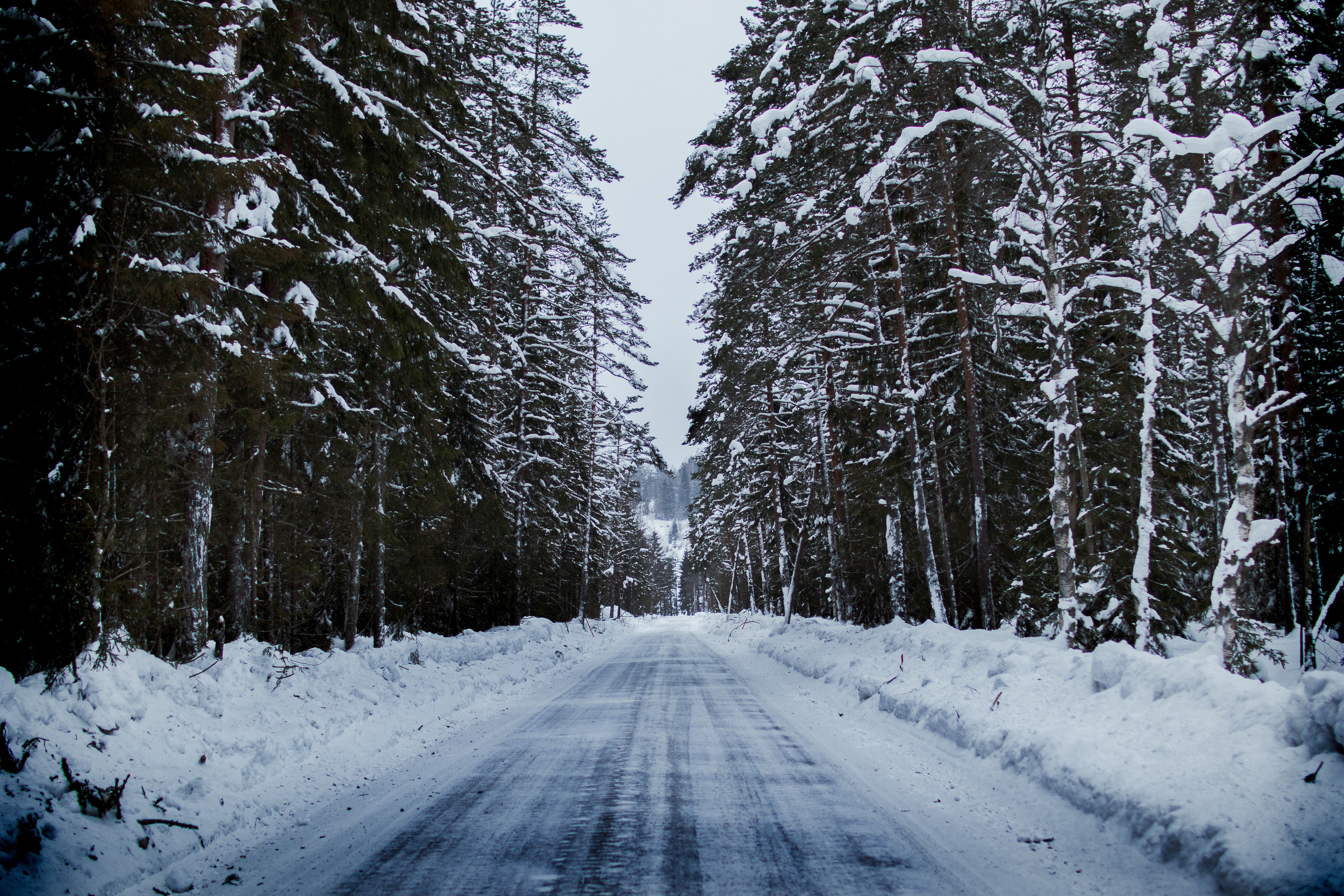 Snowy Road Between Trees, Branches, Road, Winter landscape, Winter, HQ Photo