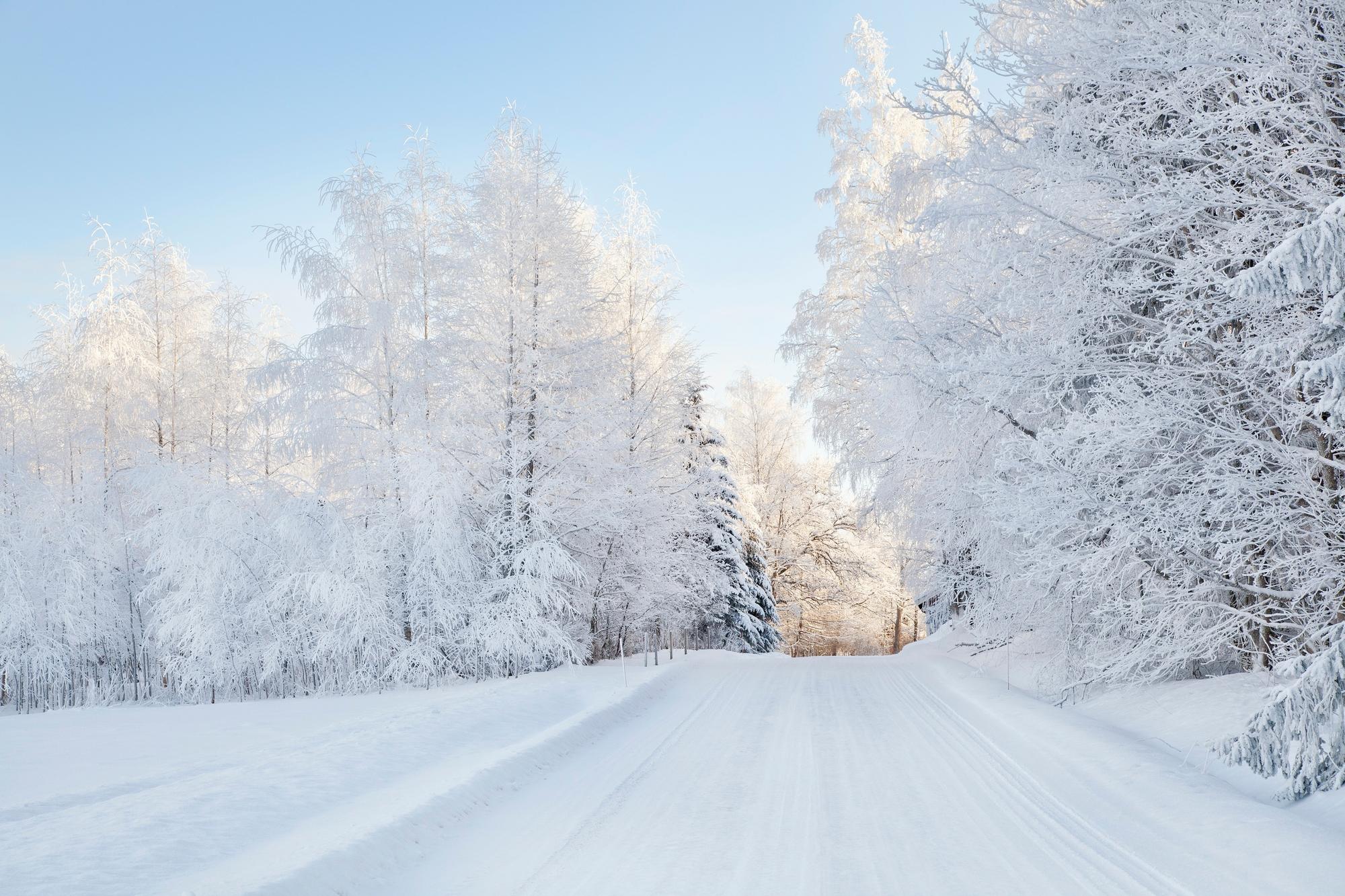 Free photo: Snowy trees - Beautiful, Big, Countryside ...