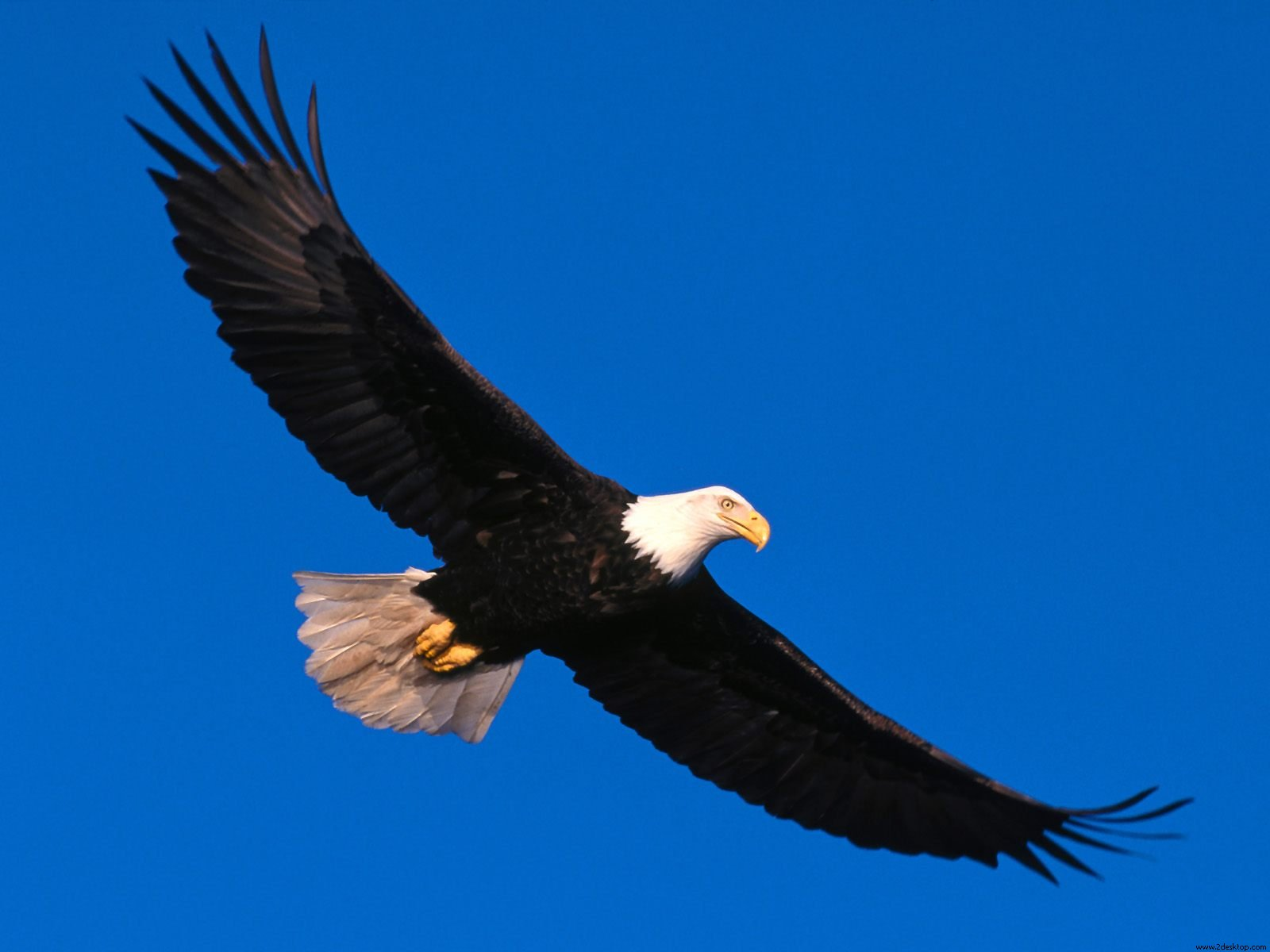 Eagle Soaring High Facebook Covers | Wallpapers HD