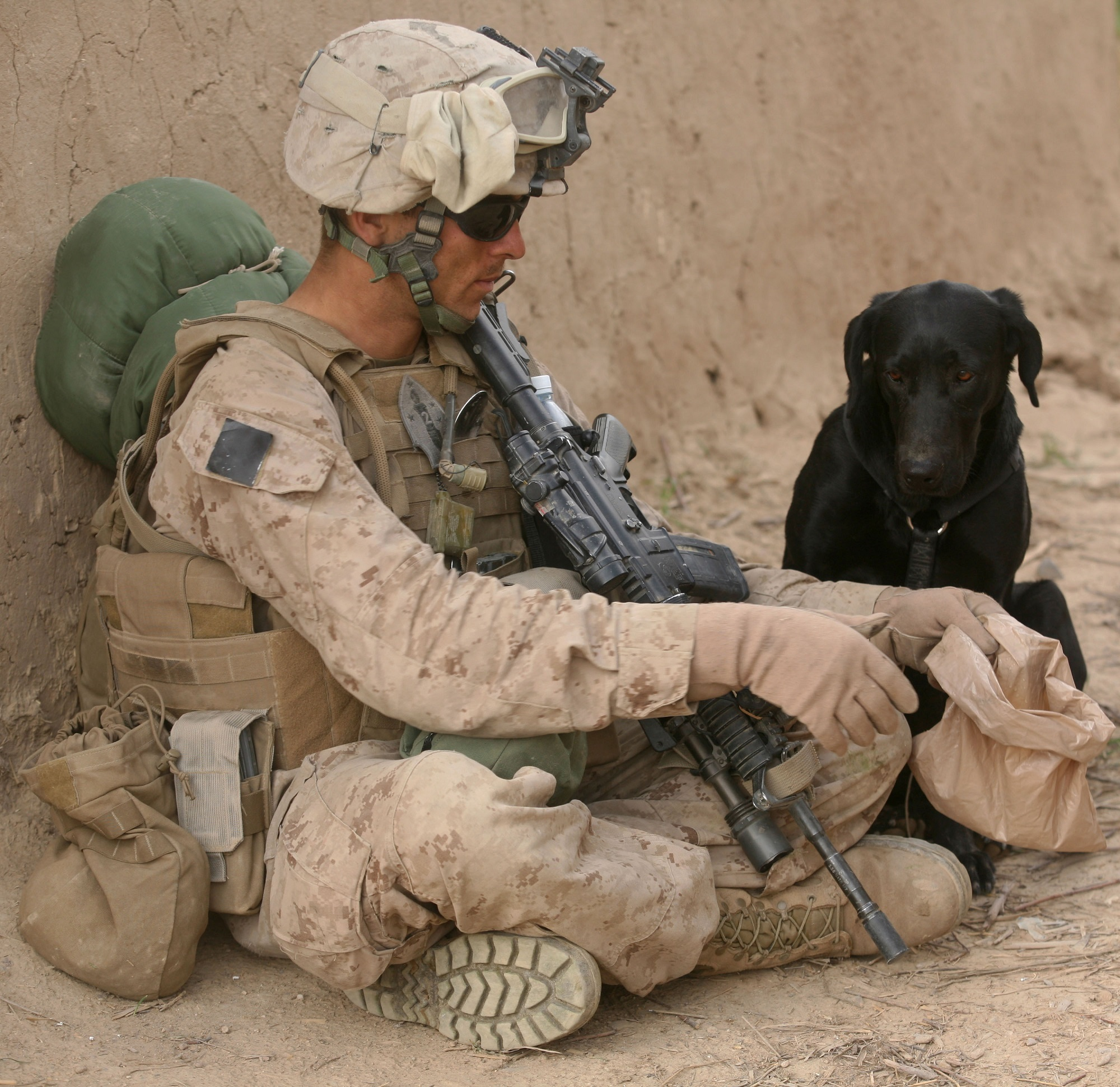 Solider with dog photo