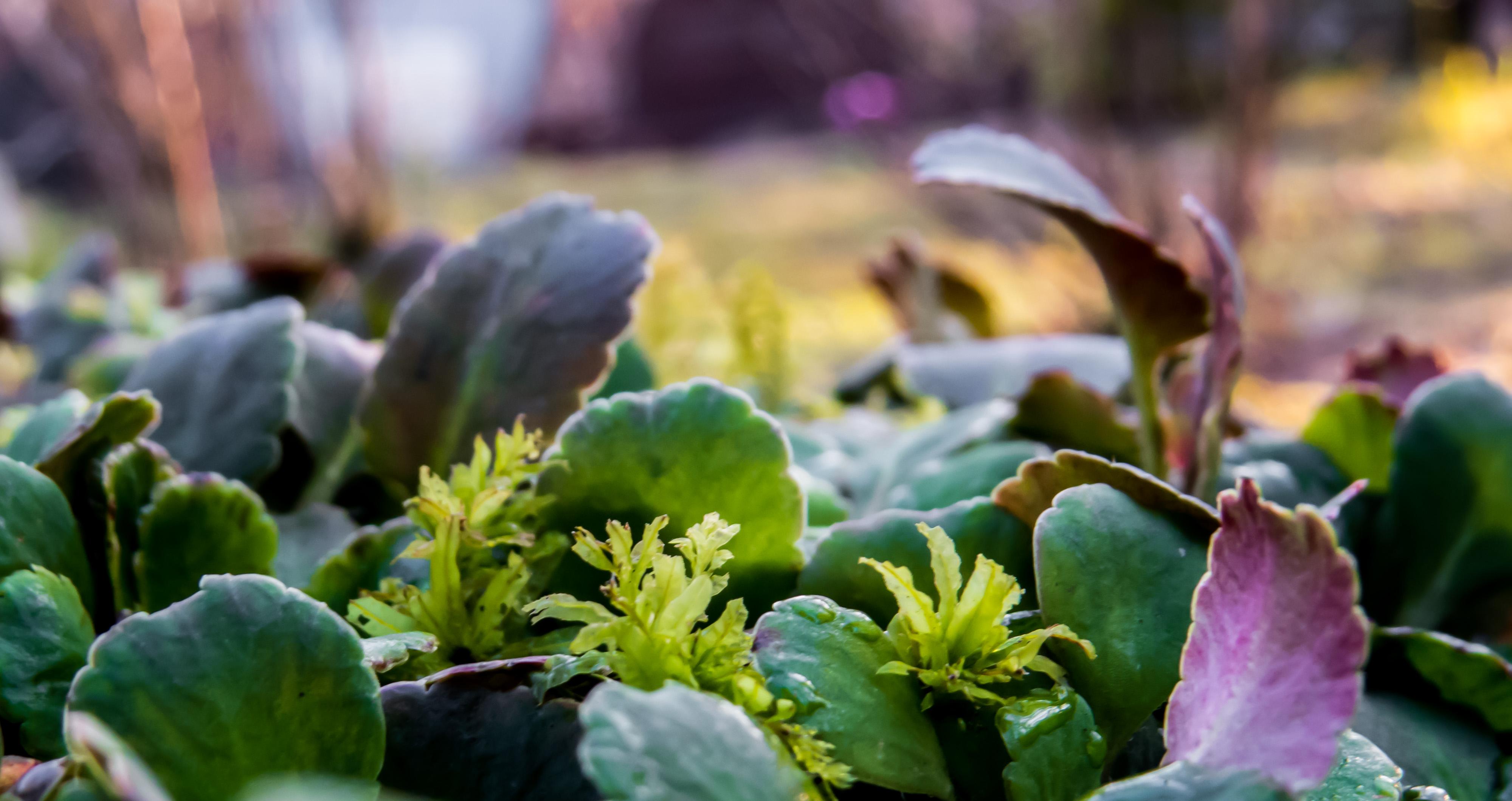 Some plants, Autumn, Beautiful, Graveyard, Green, HQ Photo