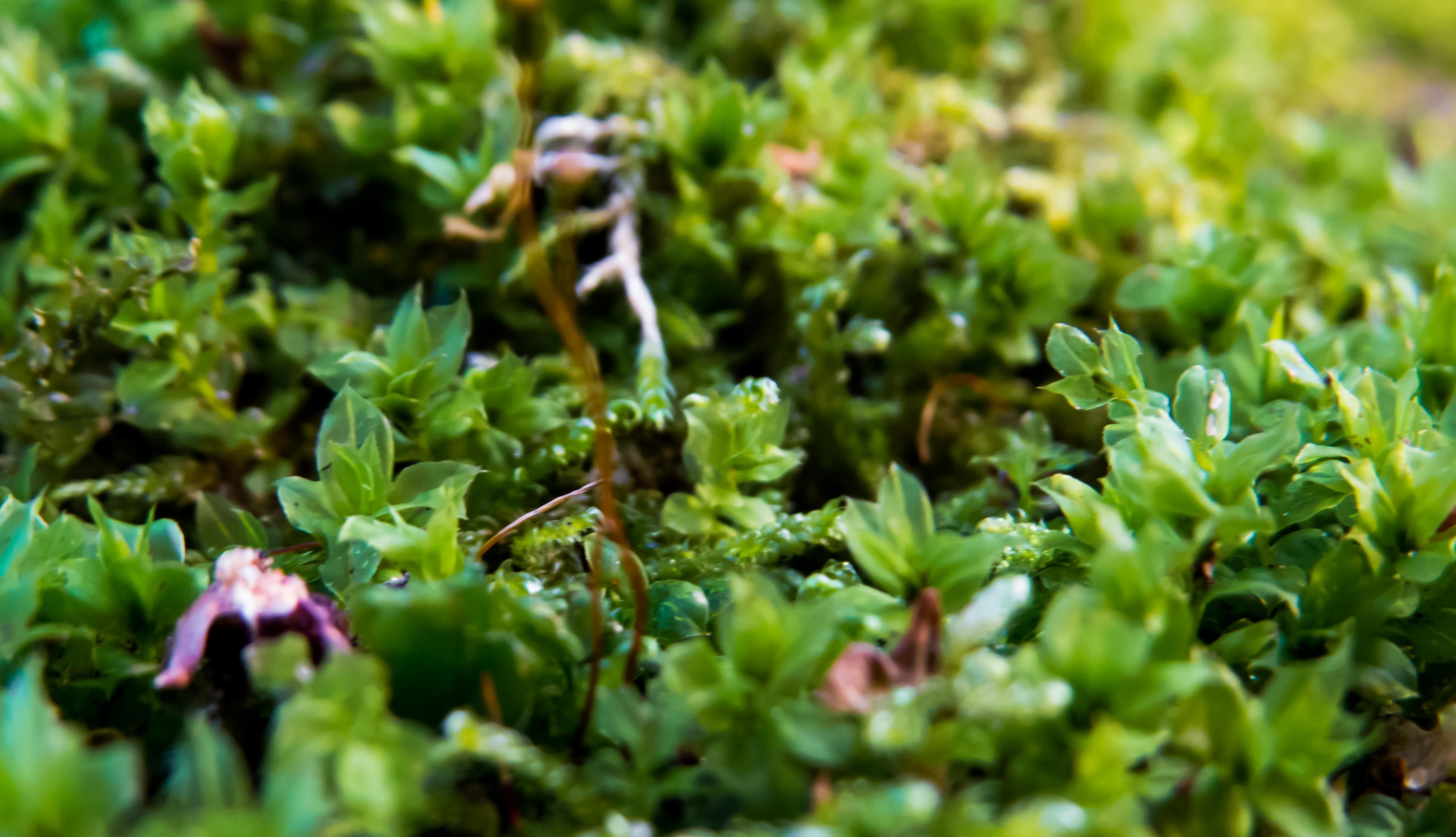 Some plants photo
