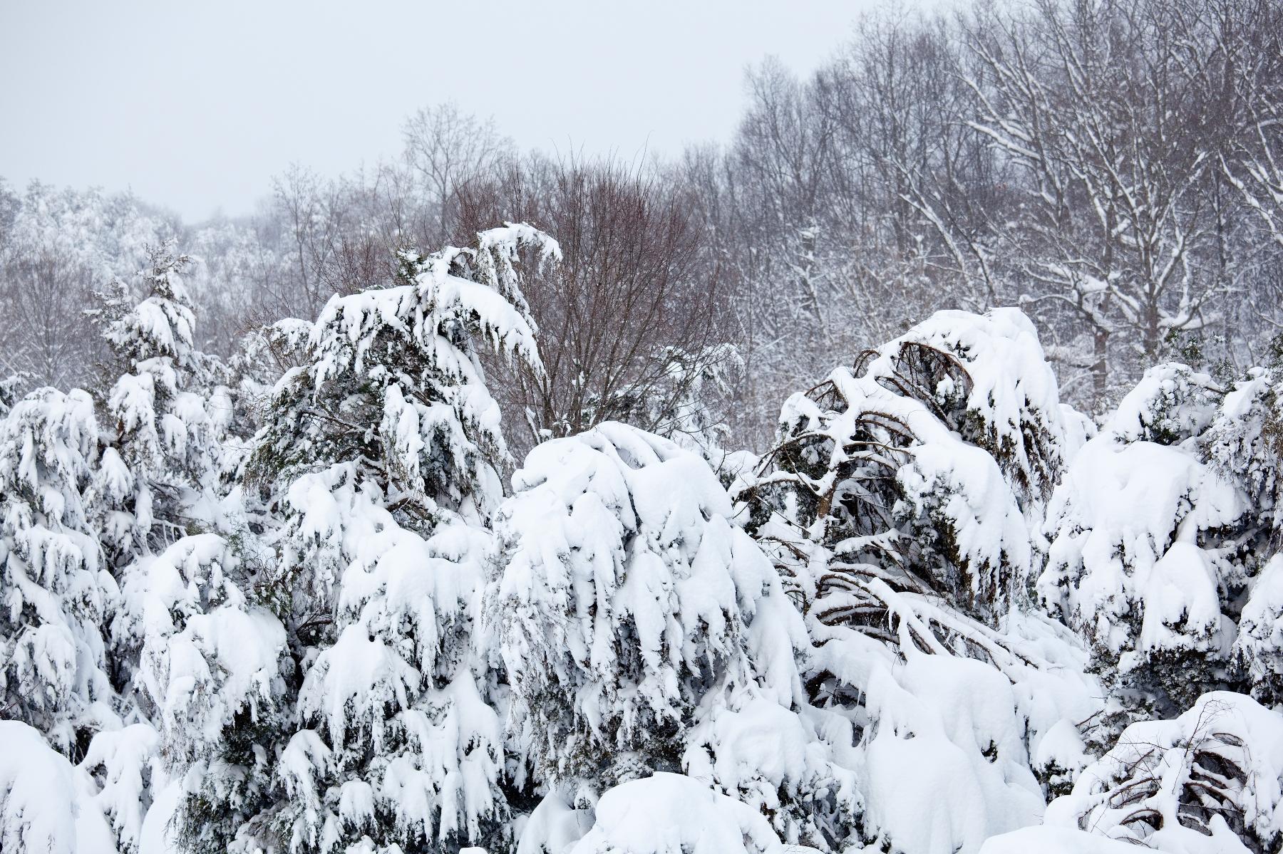 Snowy Plants - Garden & Greenhouse