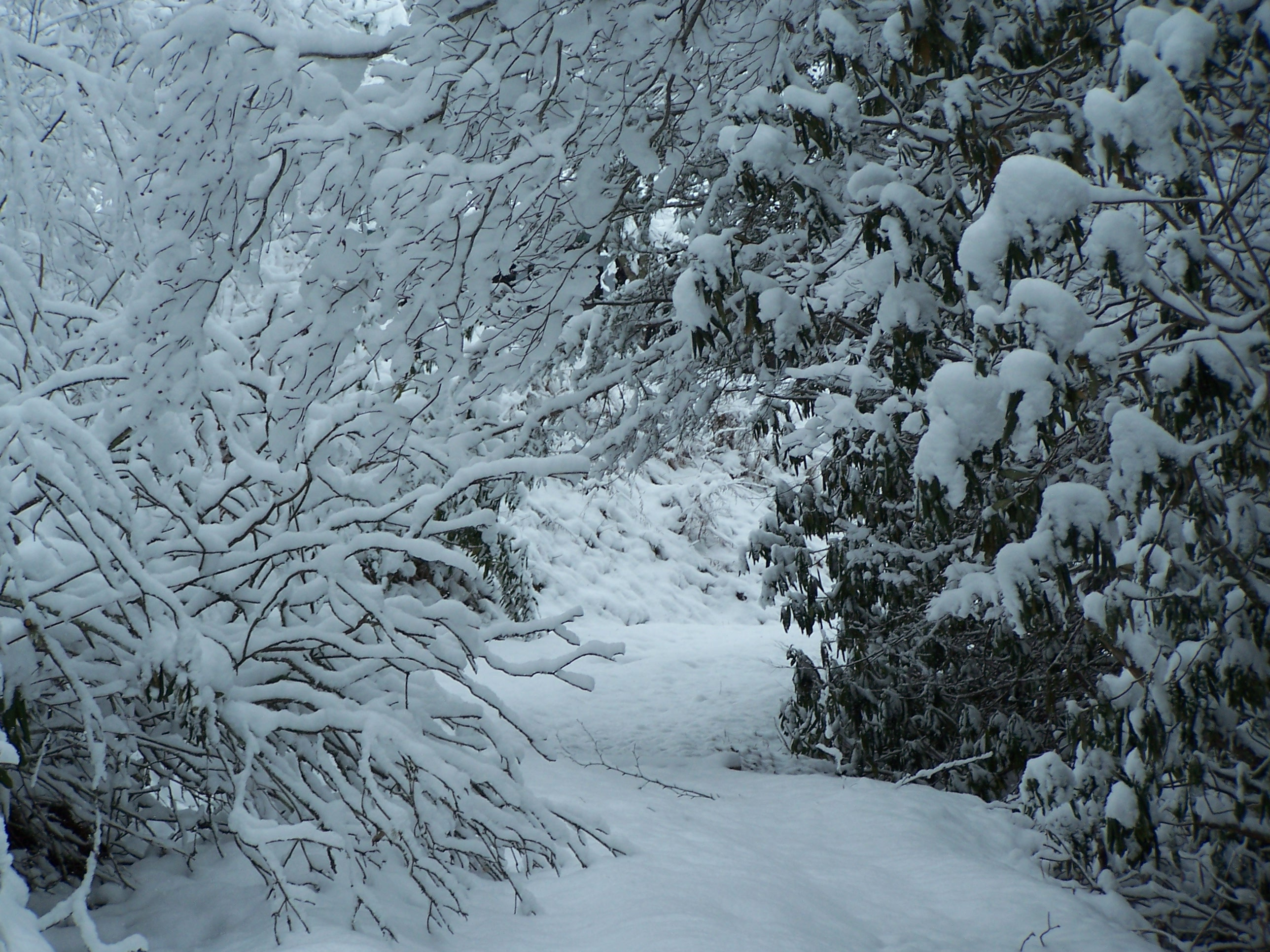 Snow and Cold Weather Can Have a Huge Impact on Landscape Plants ...