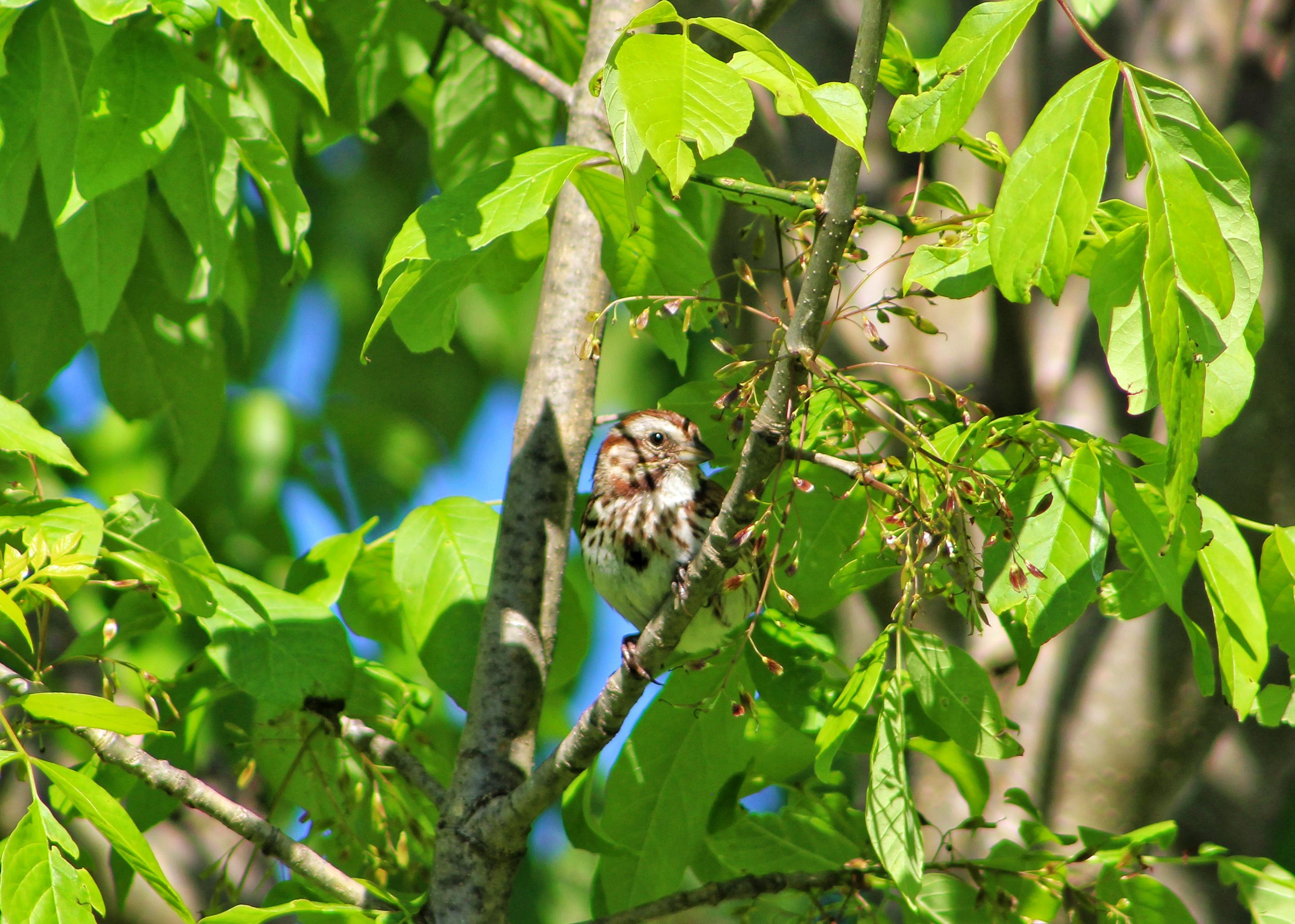 Sparrow side eye photo