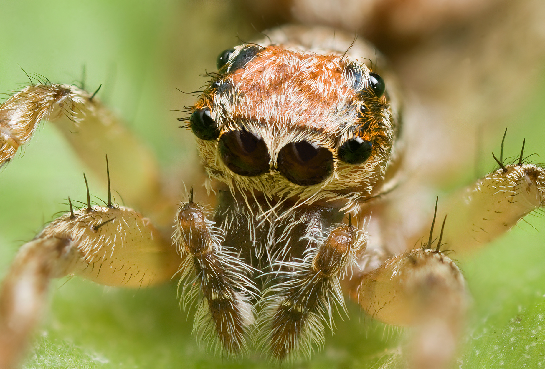 Spiders eat up to 800 million tons of insects and pests a year ...