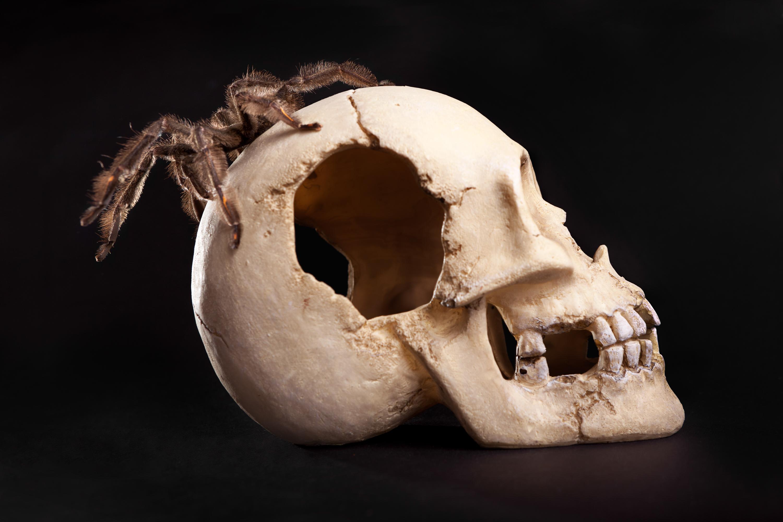 Spider on Skull, Animal, Leg, Macro, Medicine, HQ Photo