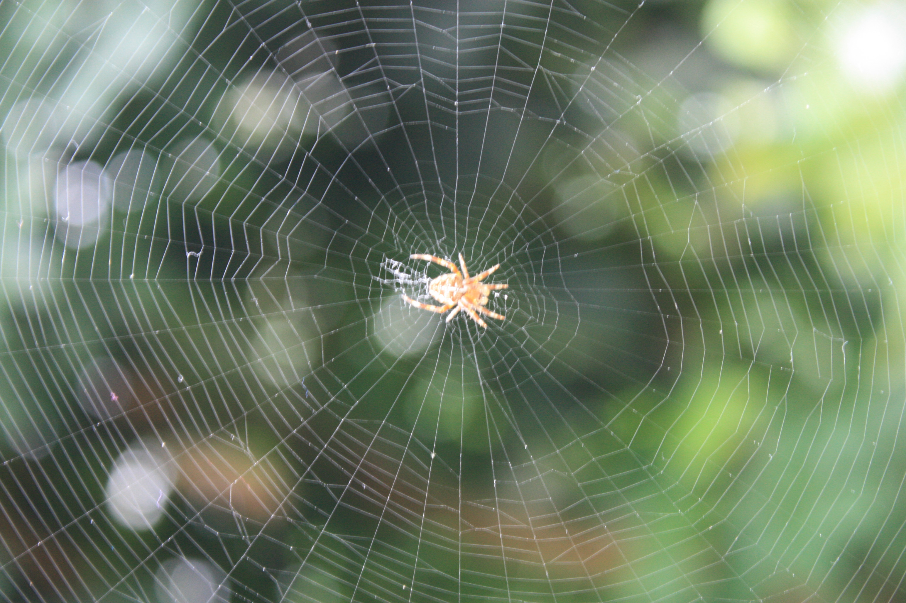 Spider web - Wikipedia