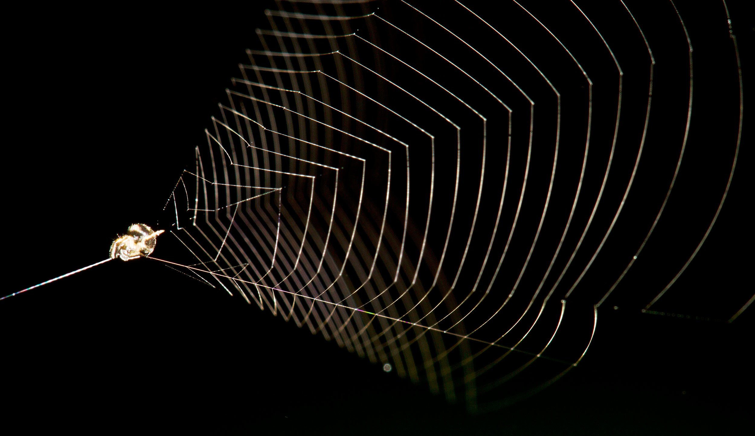Video: Clever Spider Uses Its Web Like a Slingshot to Capture ...