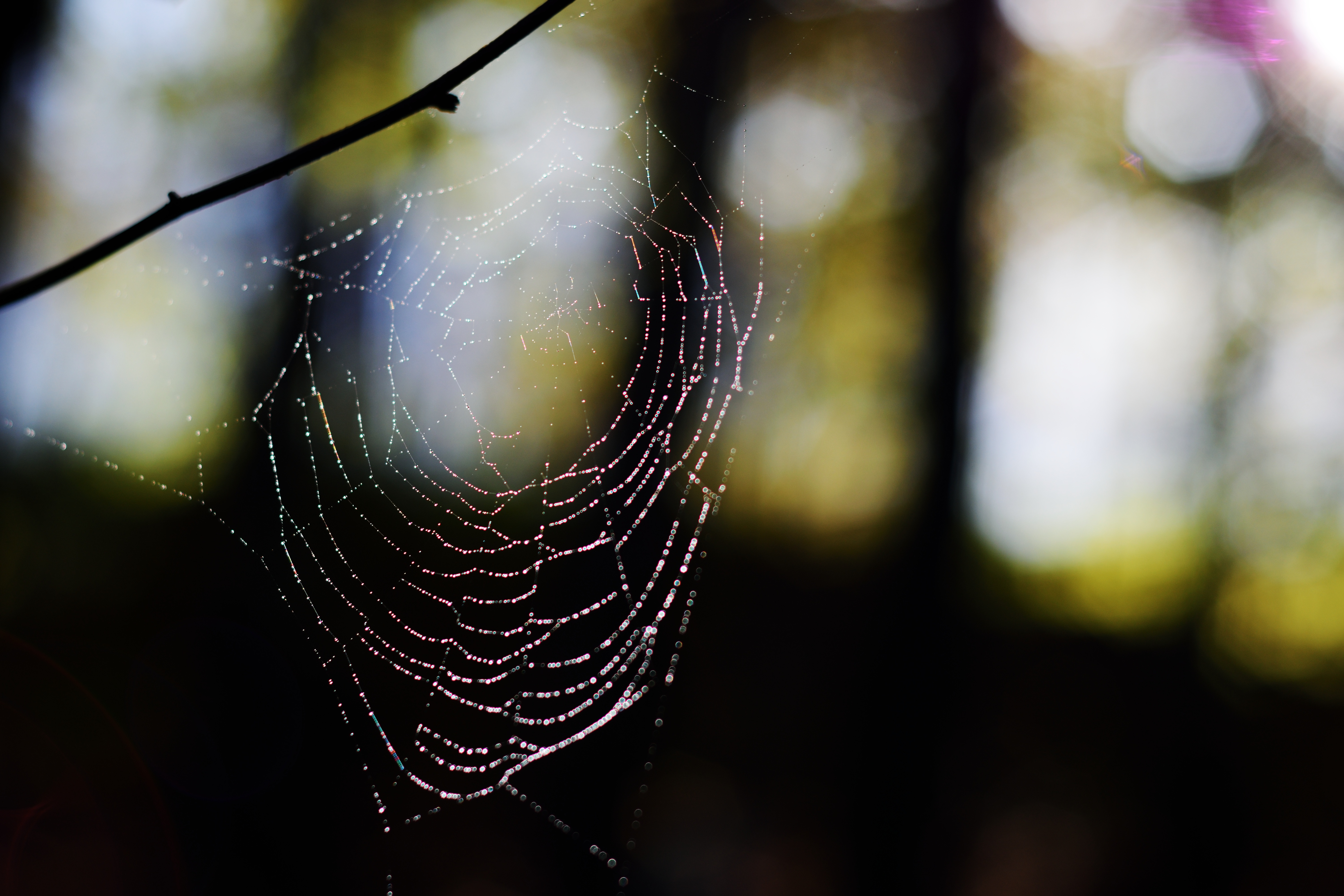Spider Web, Insect, Spider, Web, HQ Photo