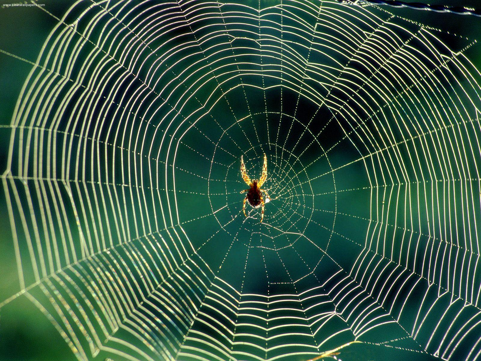 101 Proofs For God: #91 Spider Webs
