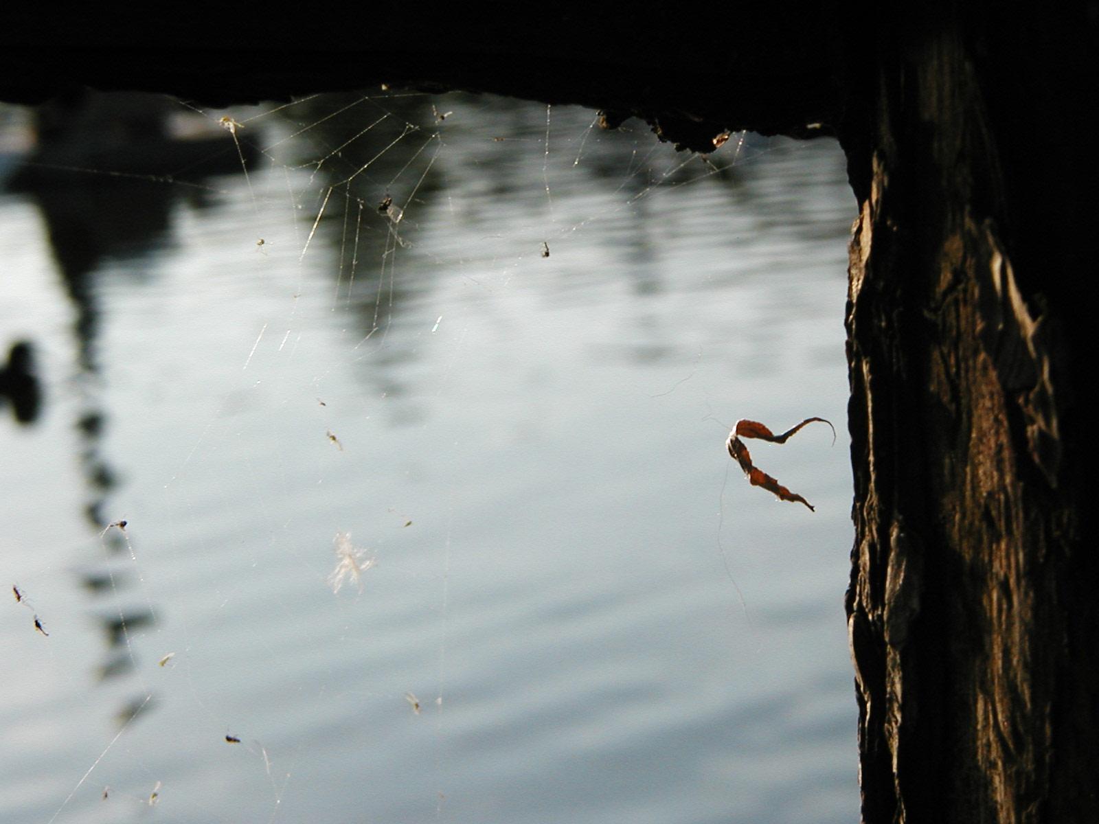 Spiderweb on tree, Park, Pond, Spider, Tree, HQ Photo