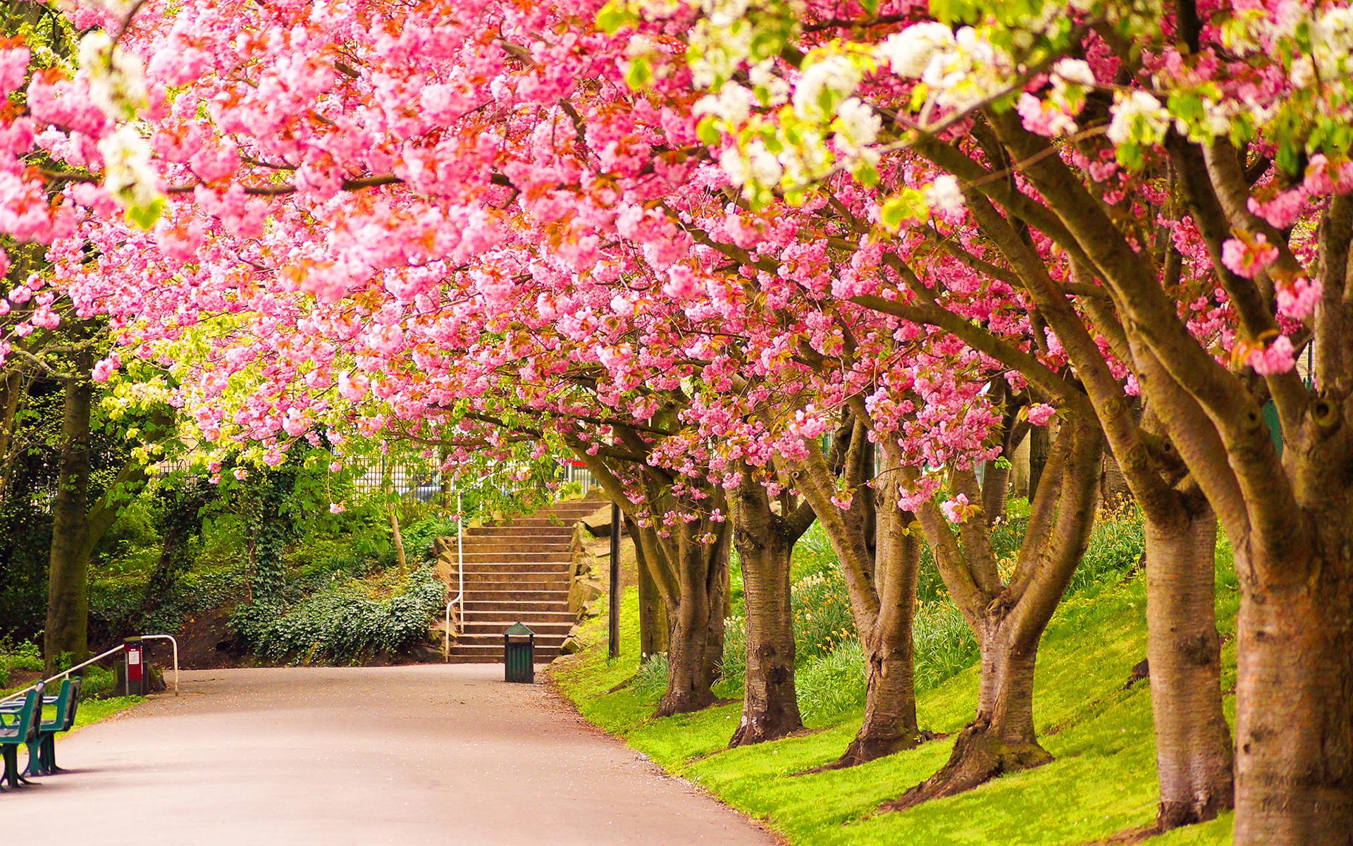 Spring Tree High Definition Wallpaper 25927 - Baltana
